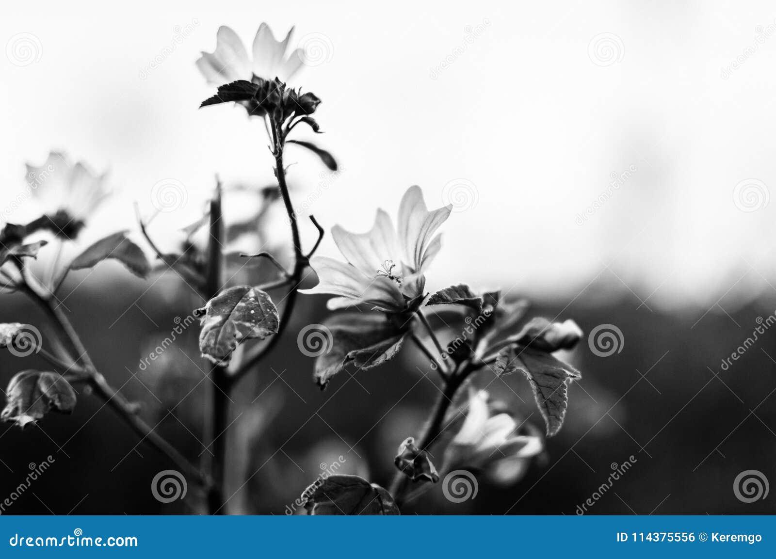 单色摘要开花背景-土耳其