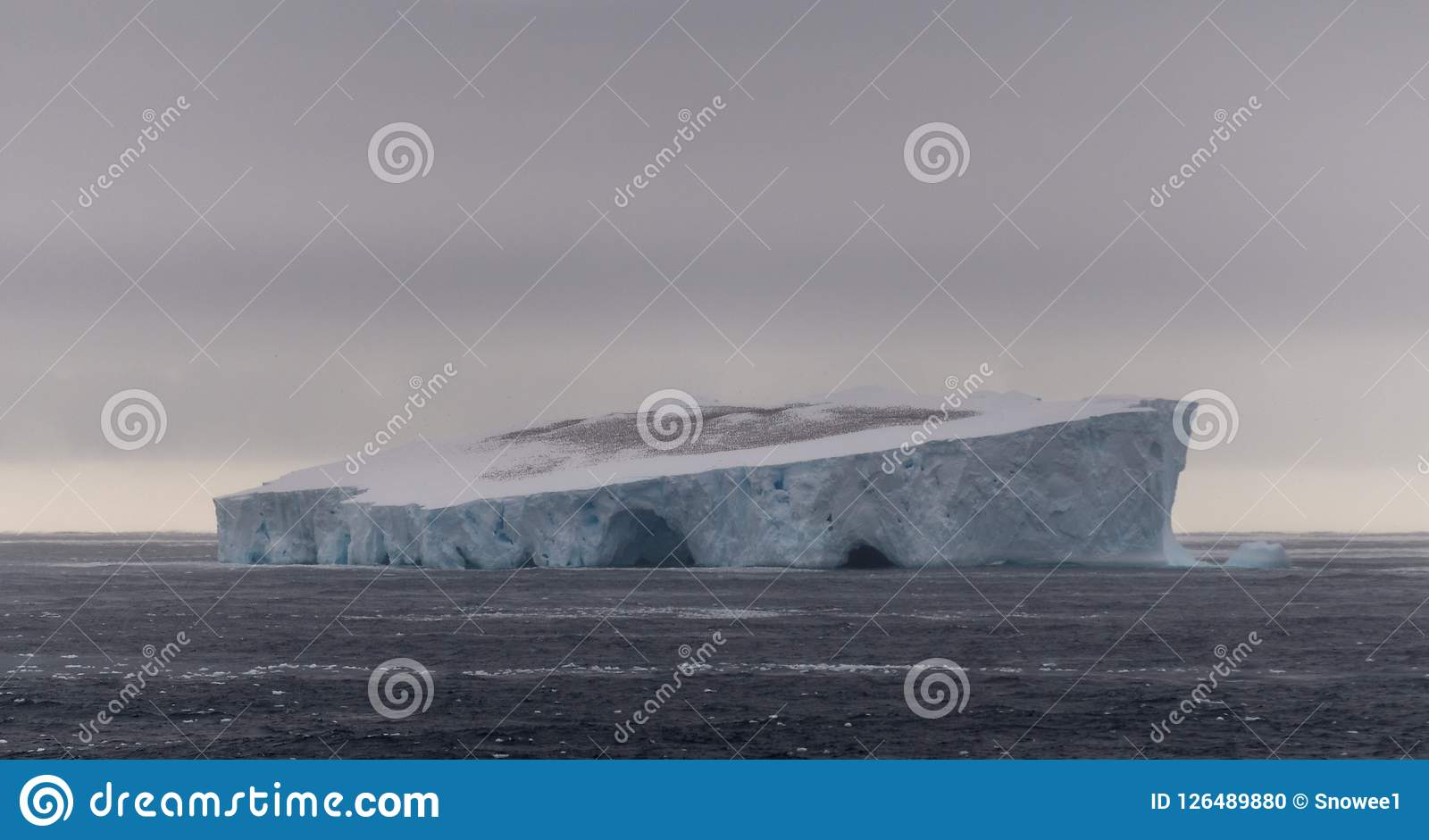 南极海燕巨大的群在表格冰山,南冰洋,南极洲顶部的