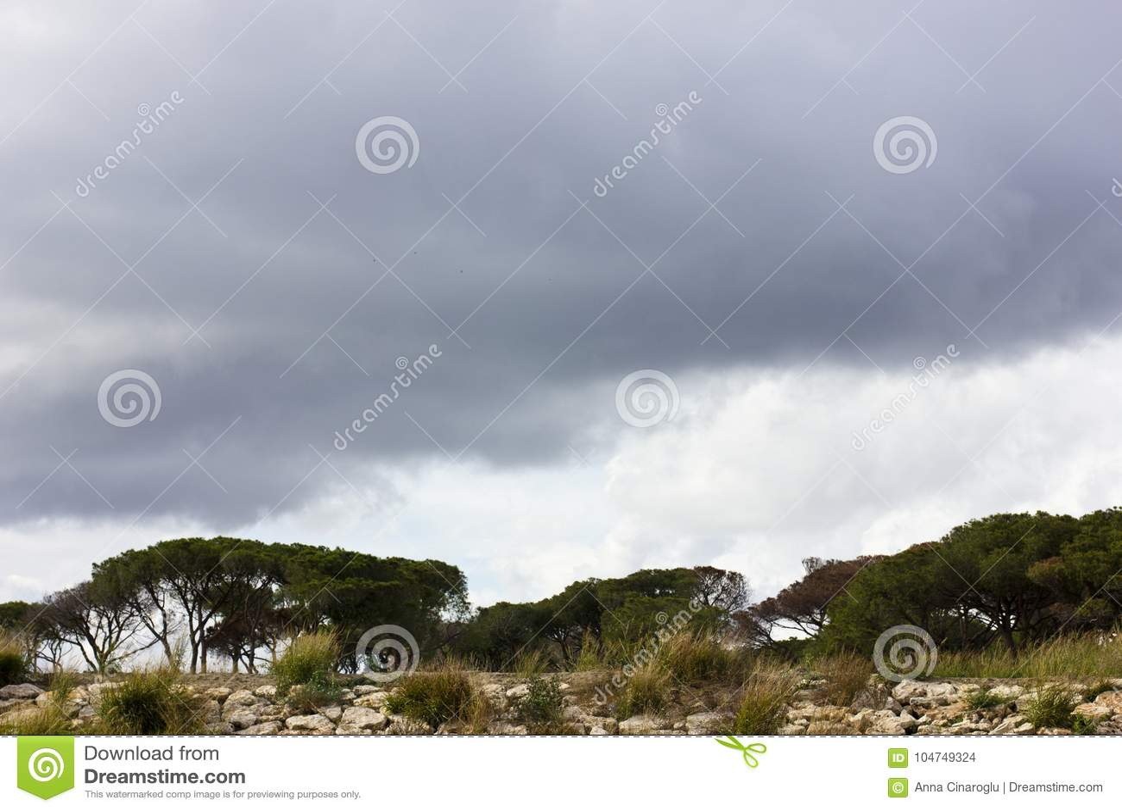 南部的杉树在与云彩的风雨如磐的紫色天空下