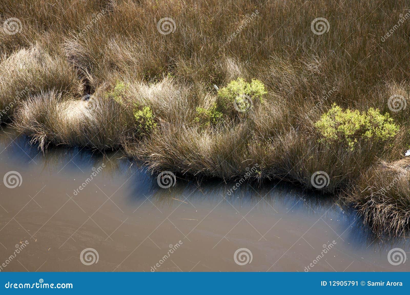 卡罗来纳州沼泽北部盐