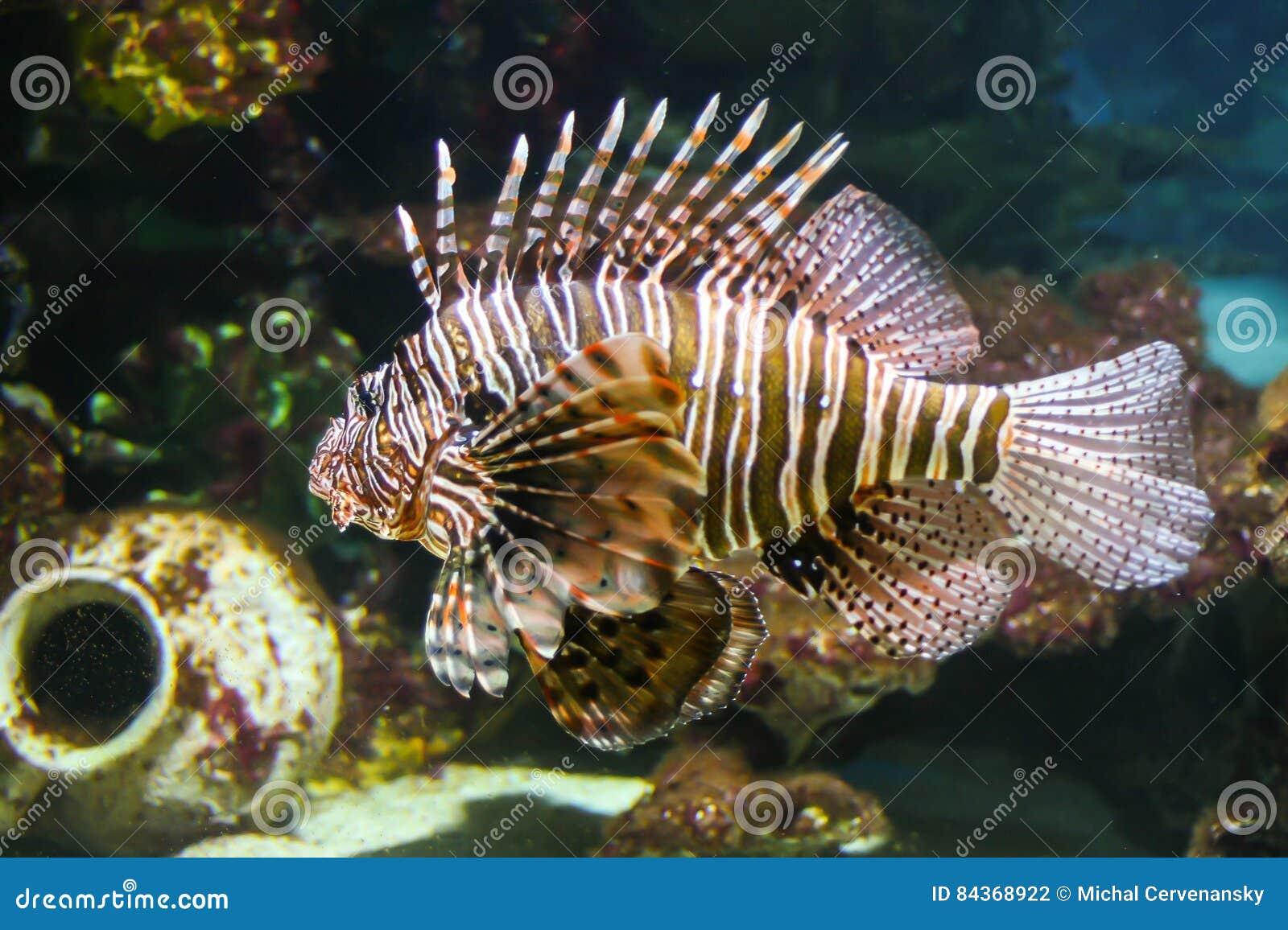 危险dealy含毒物蓑鱼