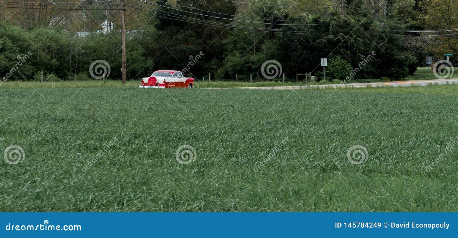 压低路的古董车围拢由树和领域