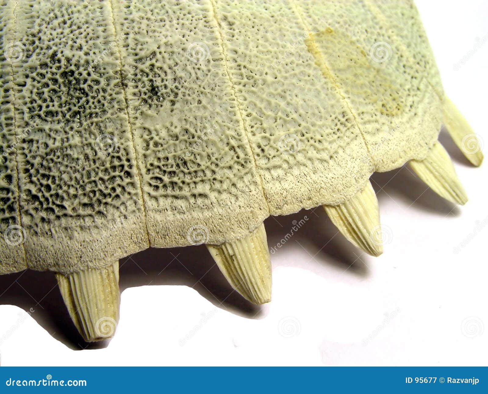 去骨壳乌龟