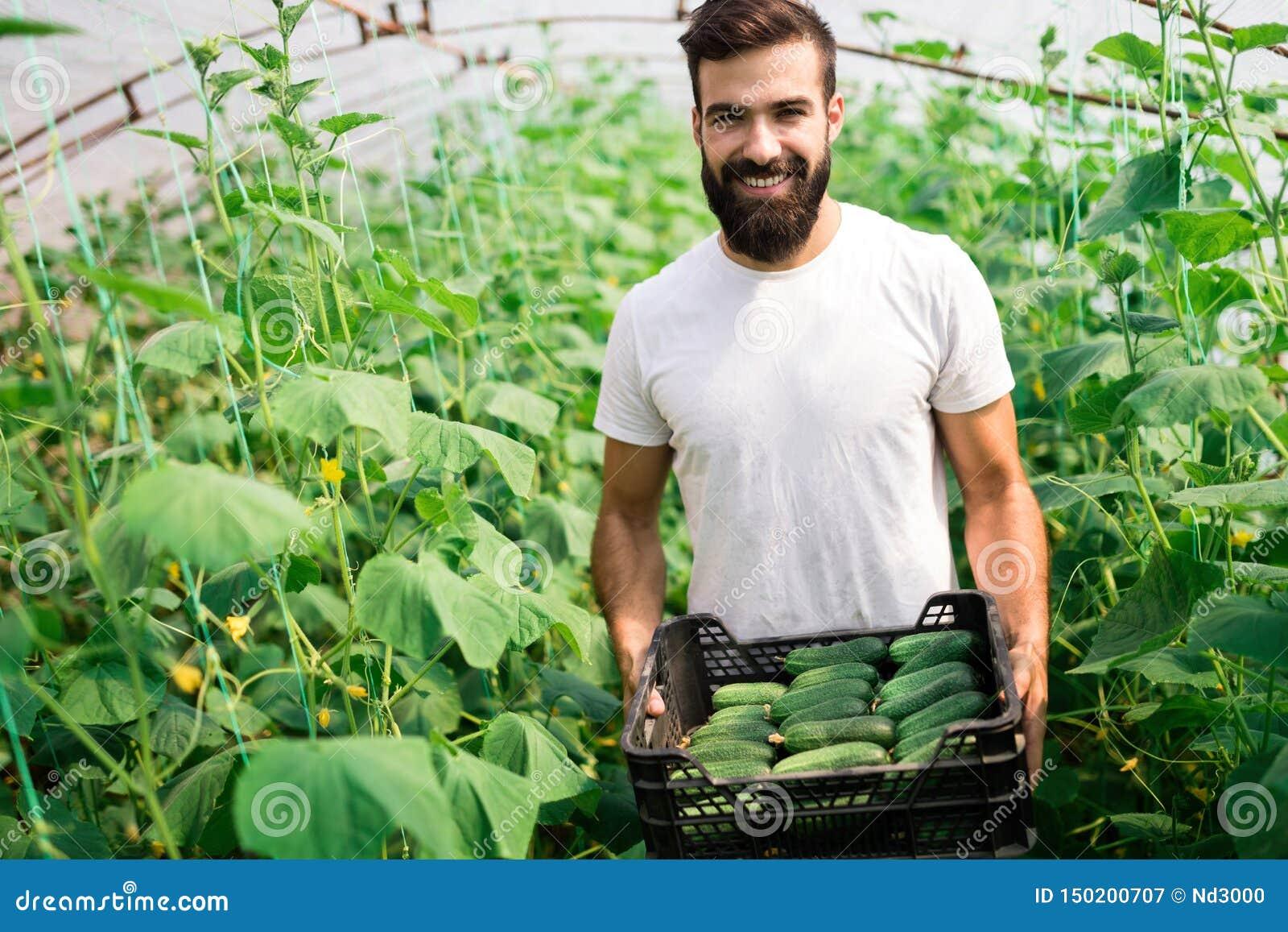 友好的农夫在工作自温室