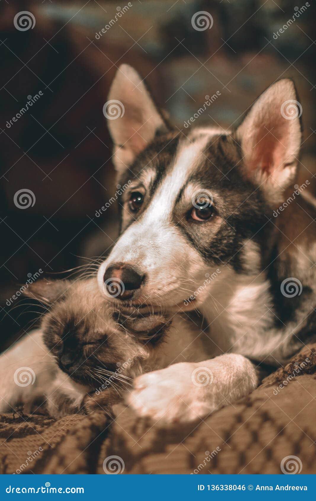 友好的在容忍的小狗和小猫