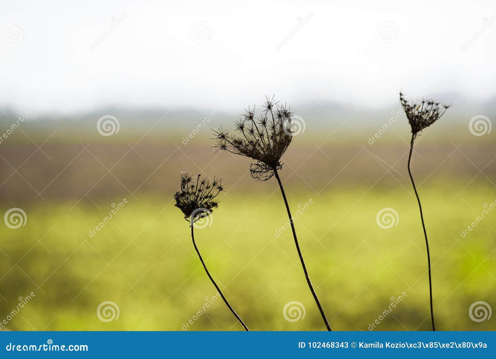 反对一个绿色草甸的干秋天花