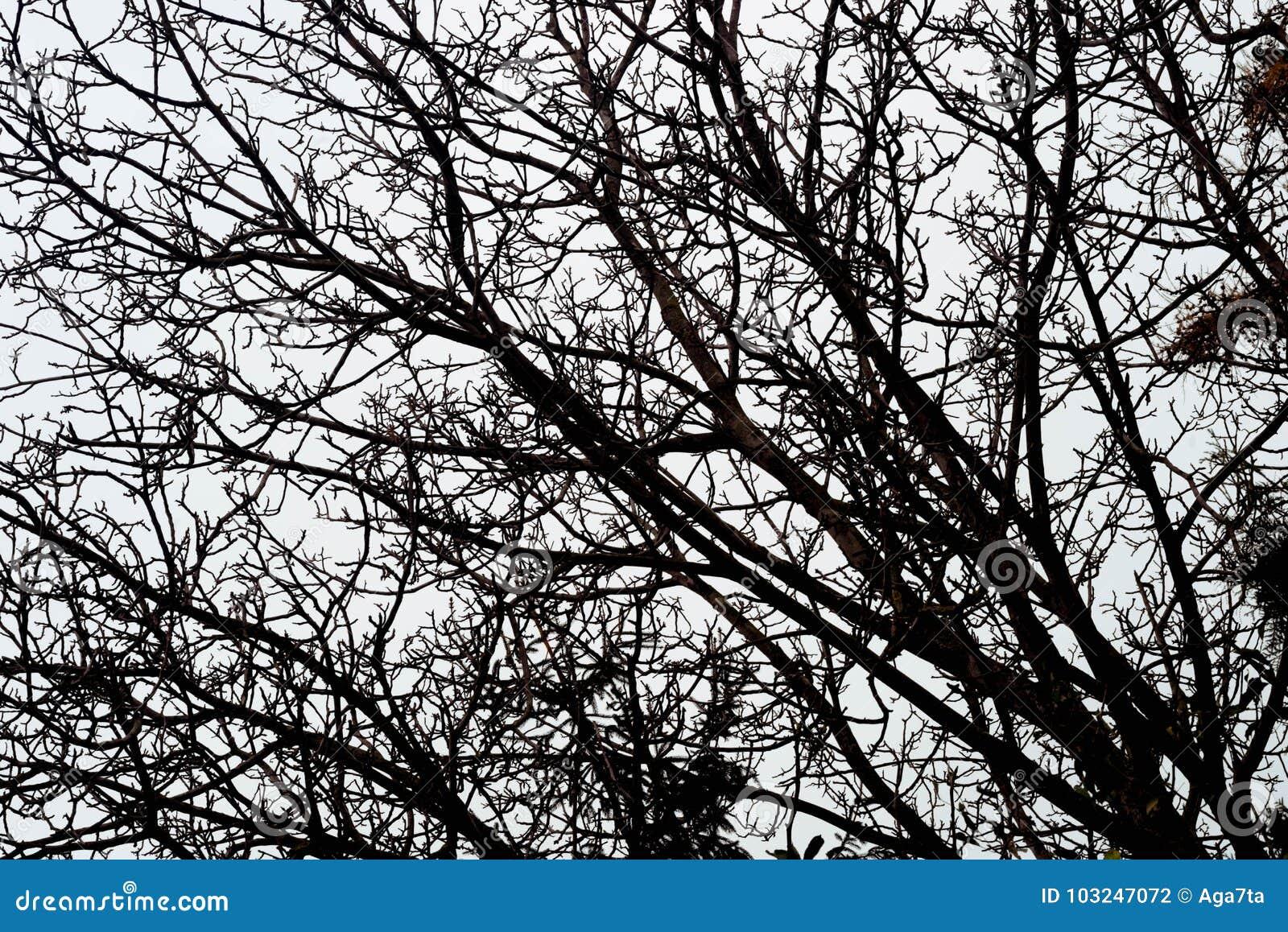 反对天空的贫瘠树枝