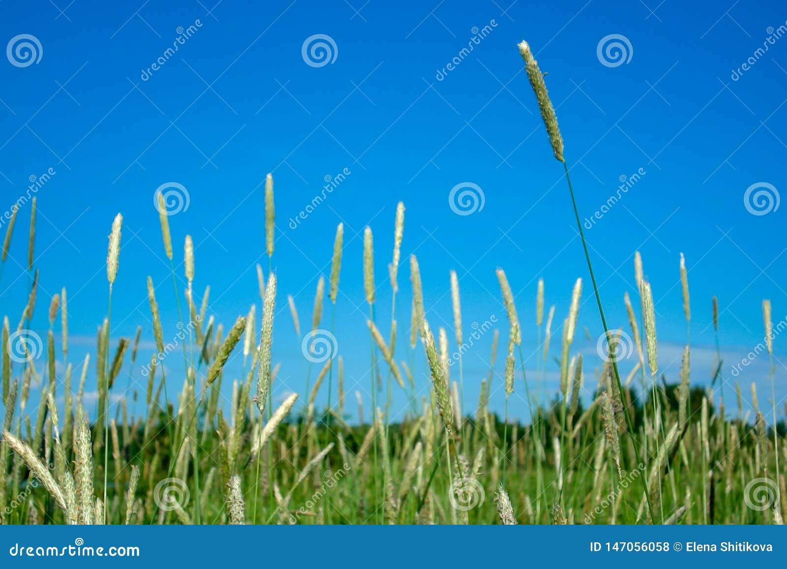 反对天空蔚蓝的草