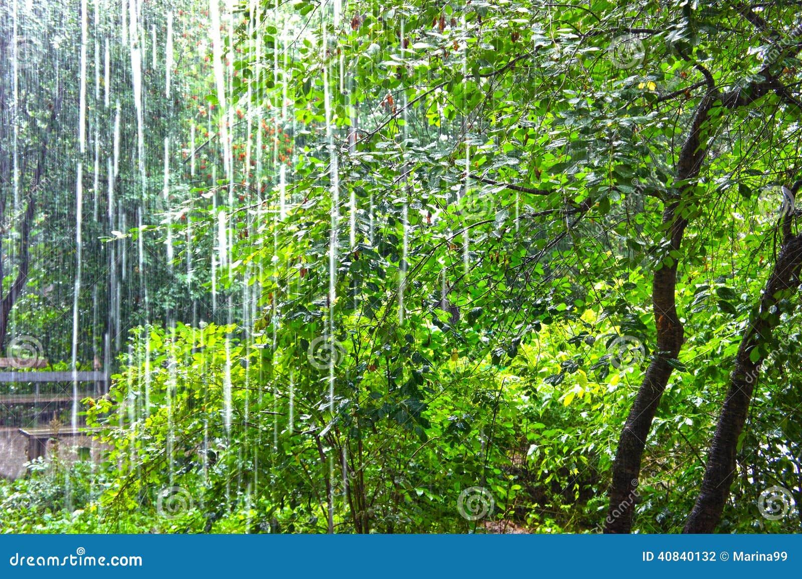反对树的大雨