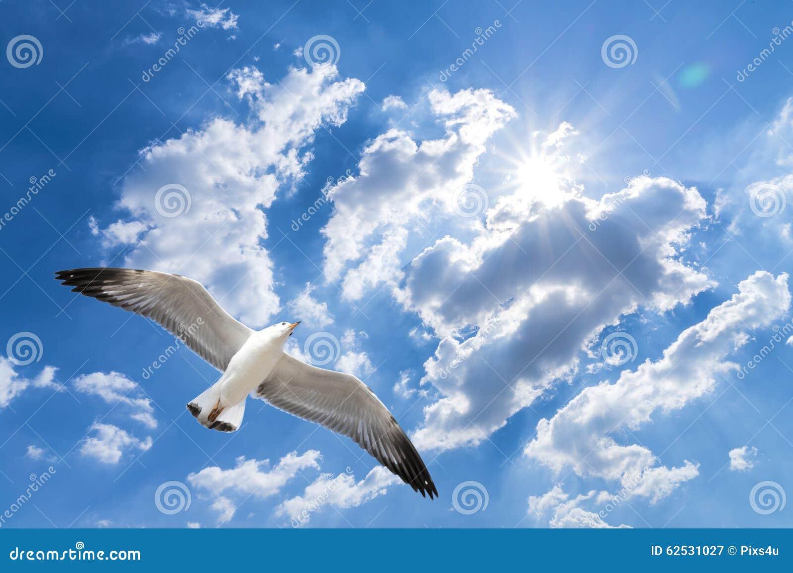 反对蓝色多云天空的海鸥飞行与精采太阳