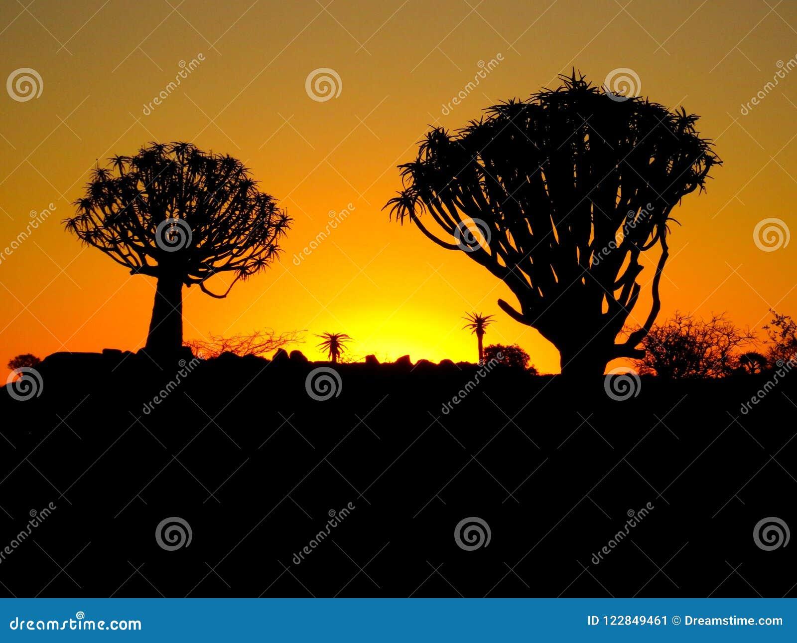 反对颤抖树的纳米比亚日落集合