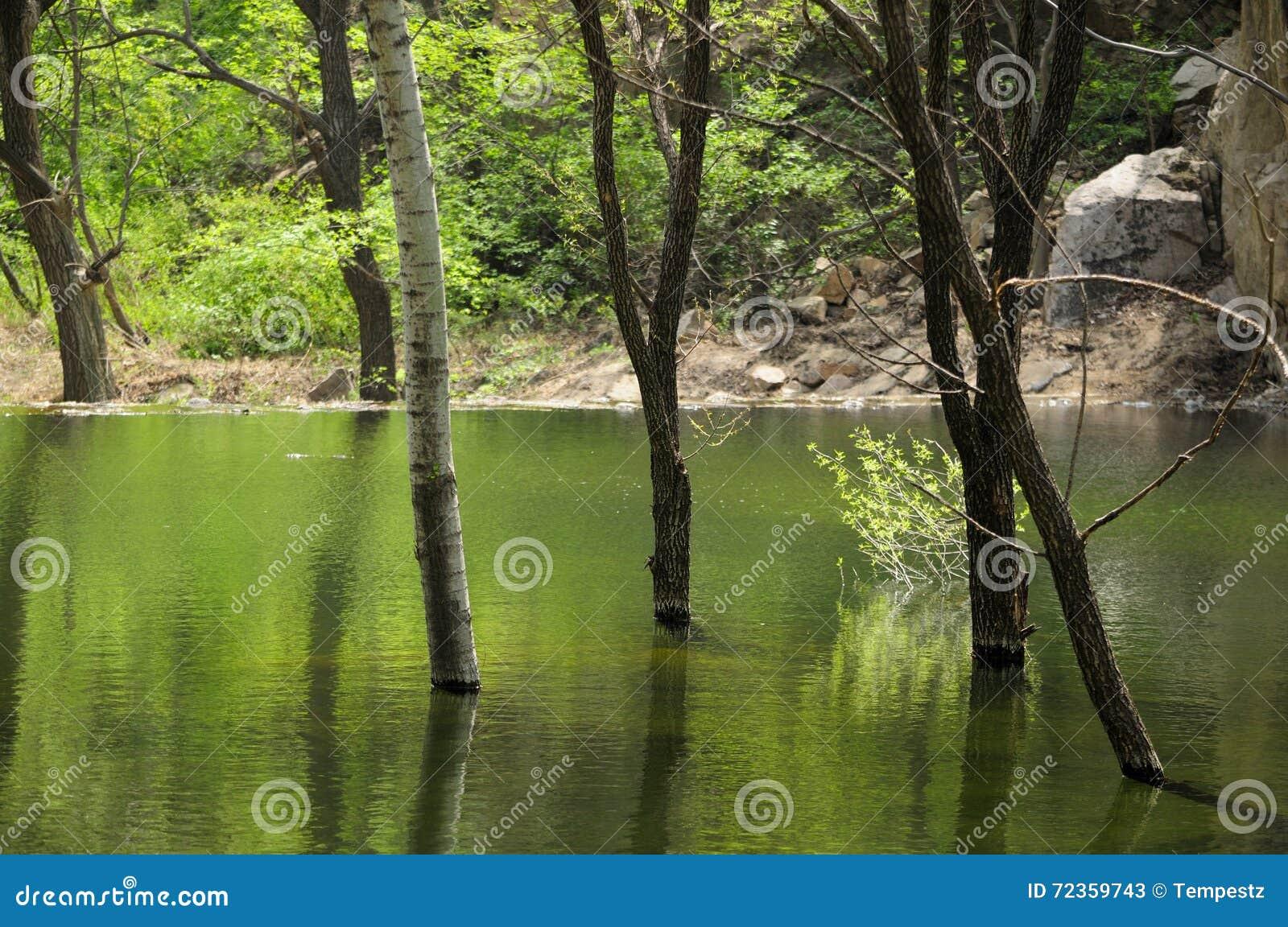 反射在瓷的水的树