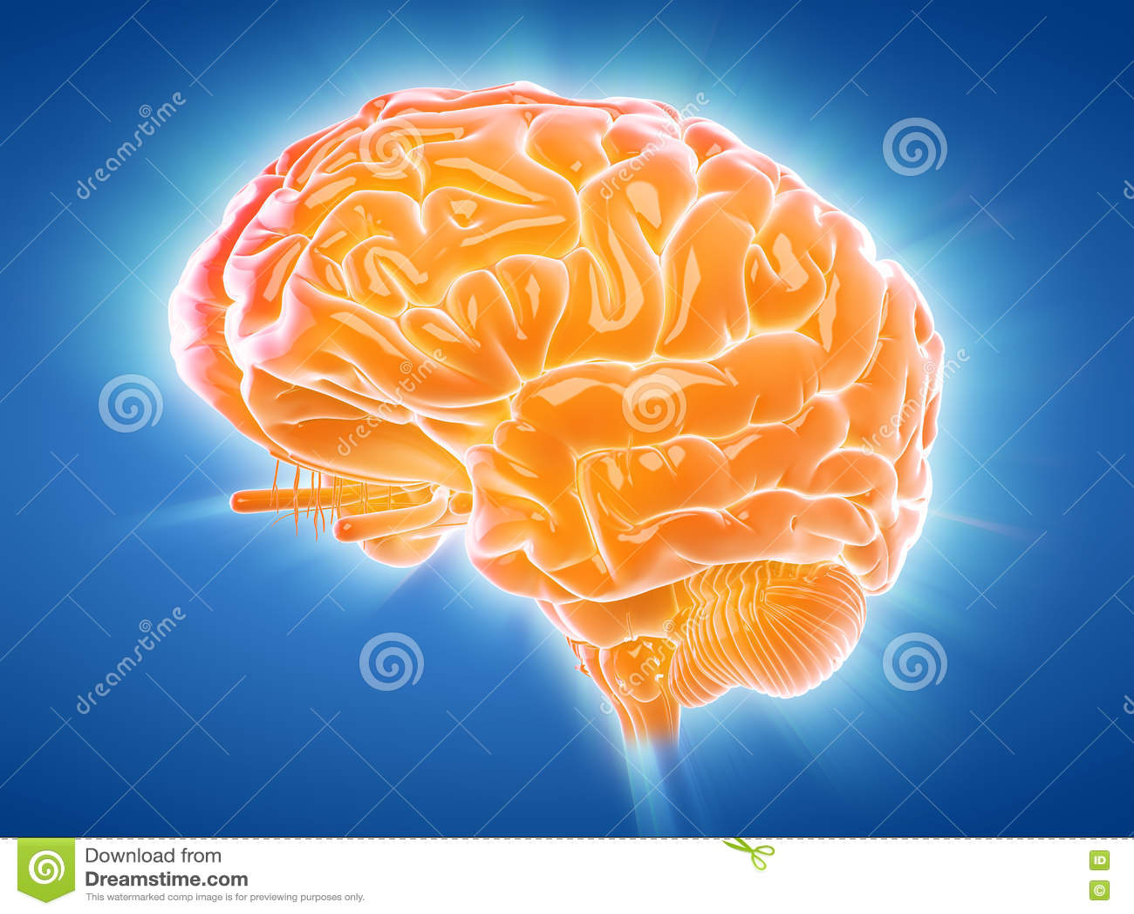 发光的脑子