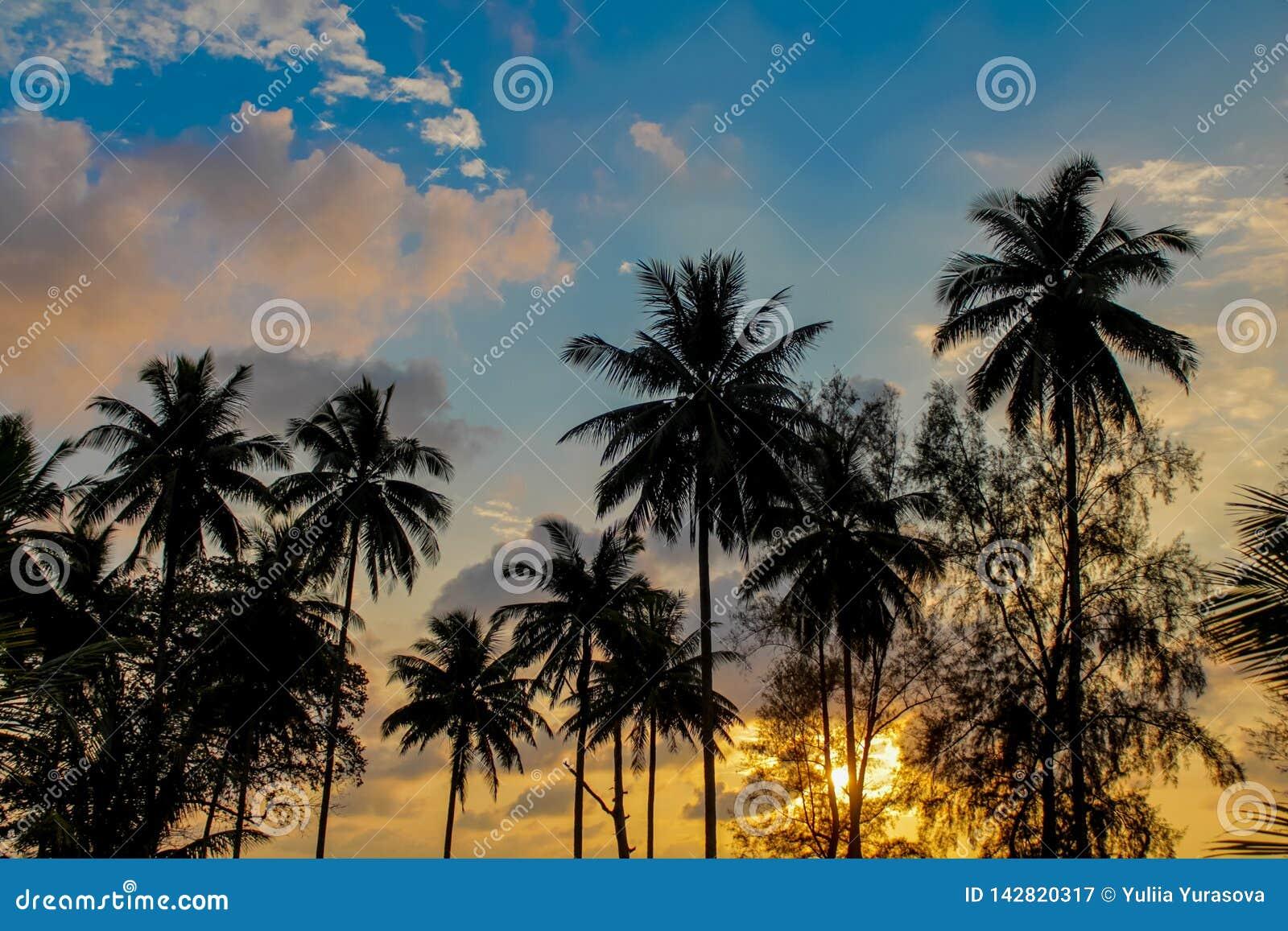发光通过云彩和棕榈树的日落光