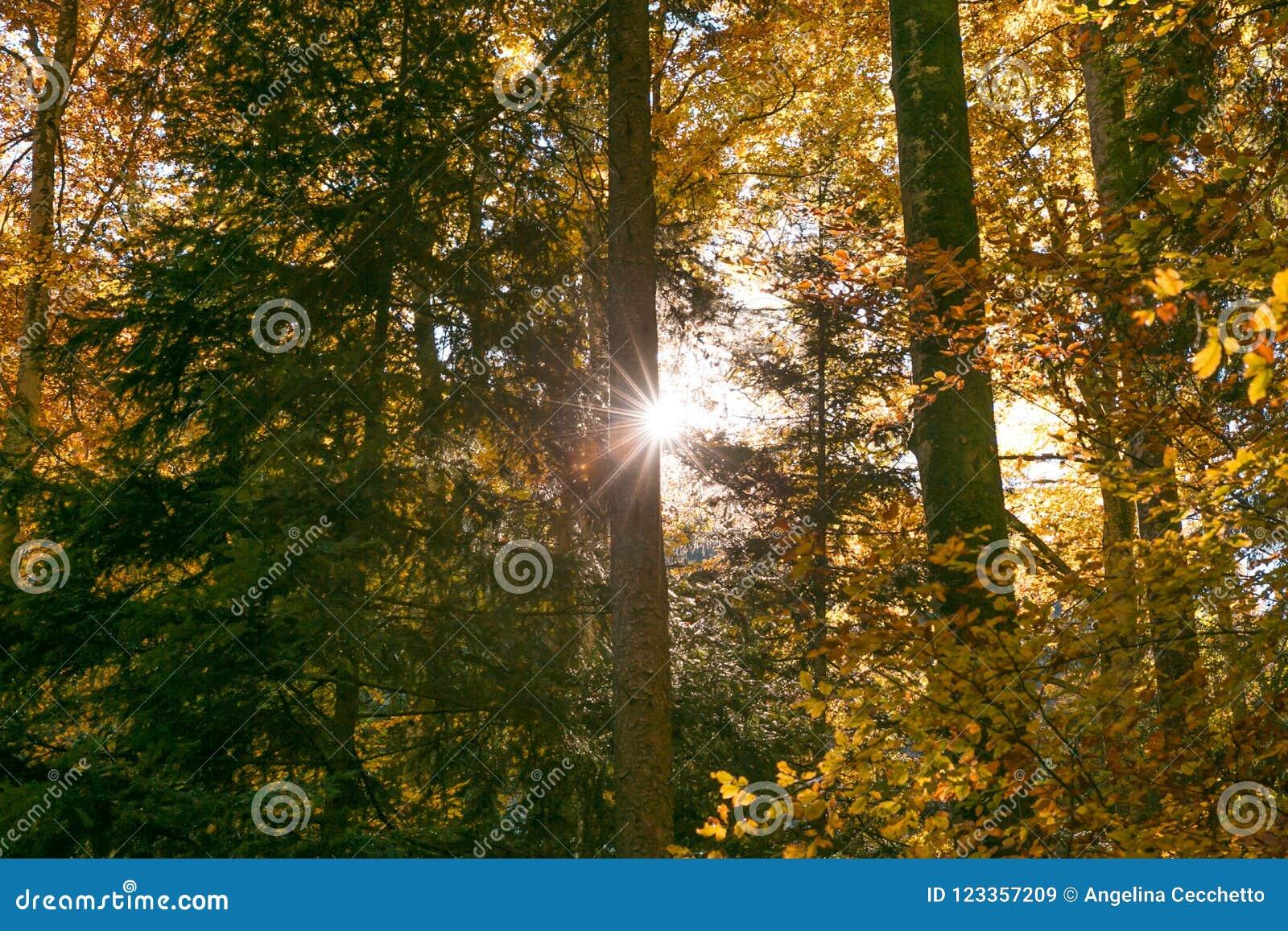 发光通过林木叶子的太阳在秋天