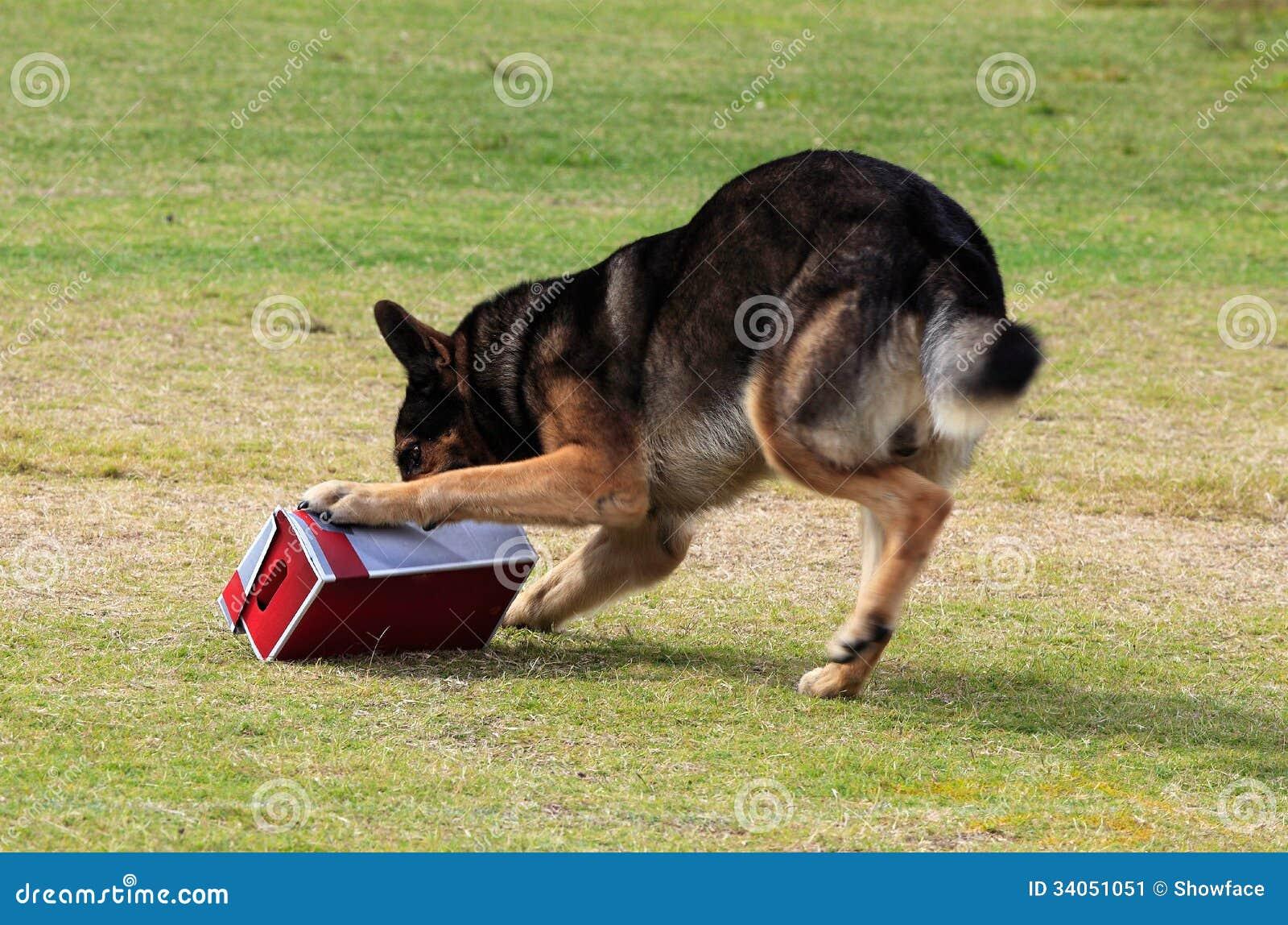 发现的工作犬服麻醉剂或炸药