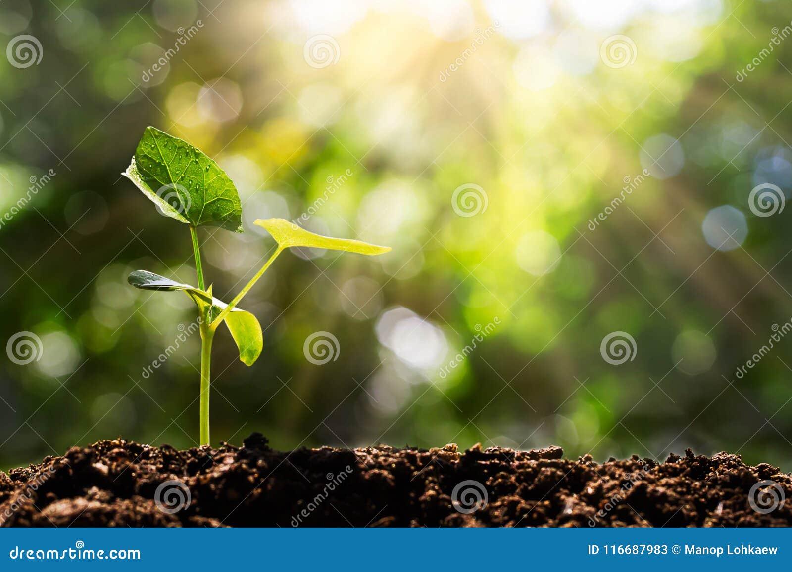 发芽在被弄脏的绿色bokeh有软的阳光背景