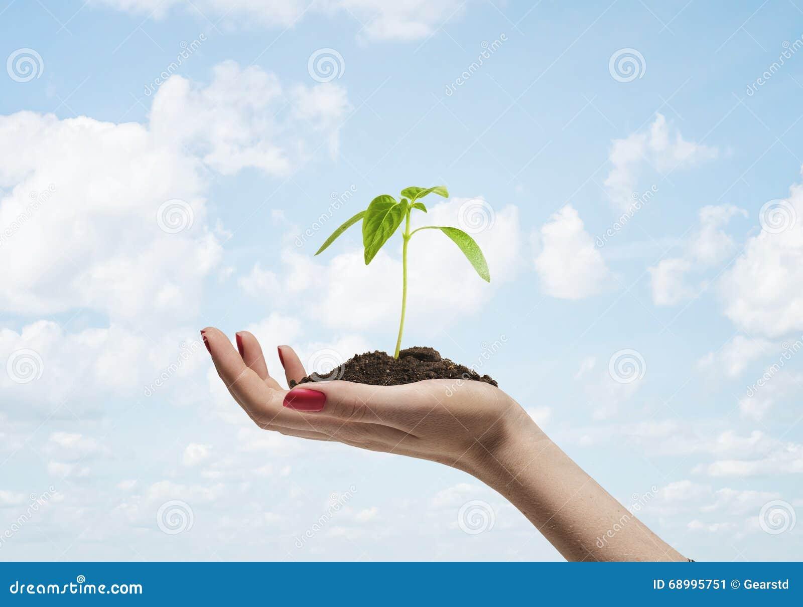 发芽生长在地面上在妇女手上