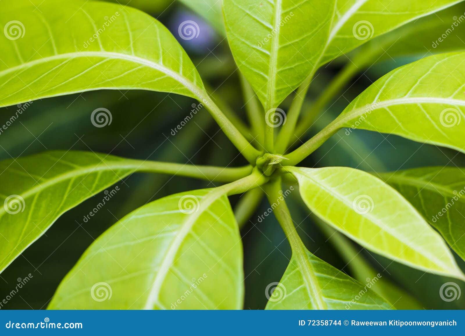 发芽的植物