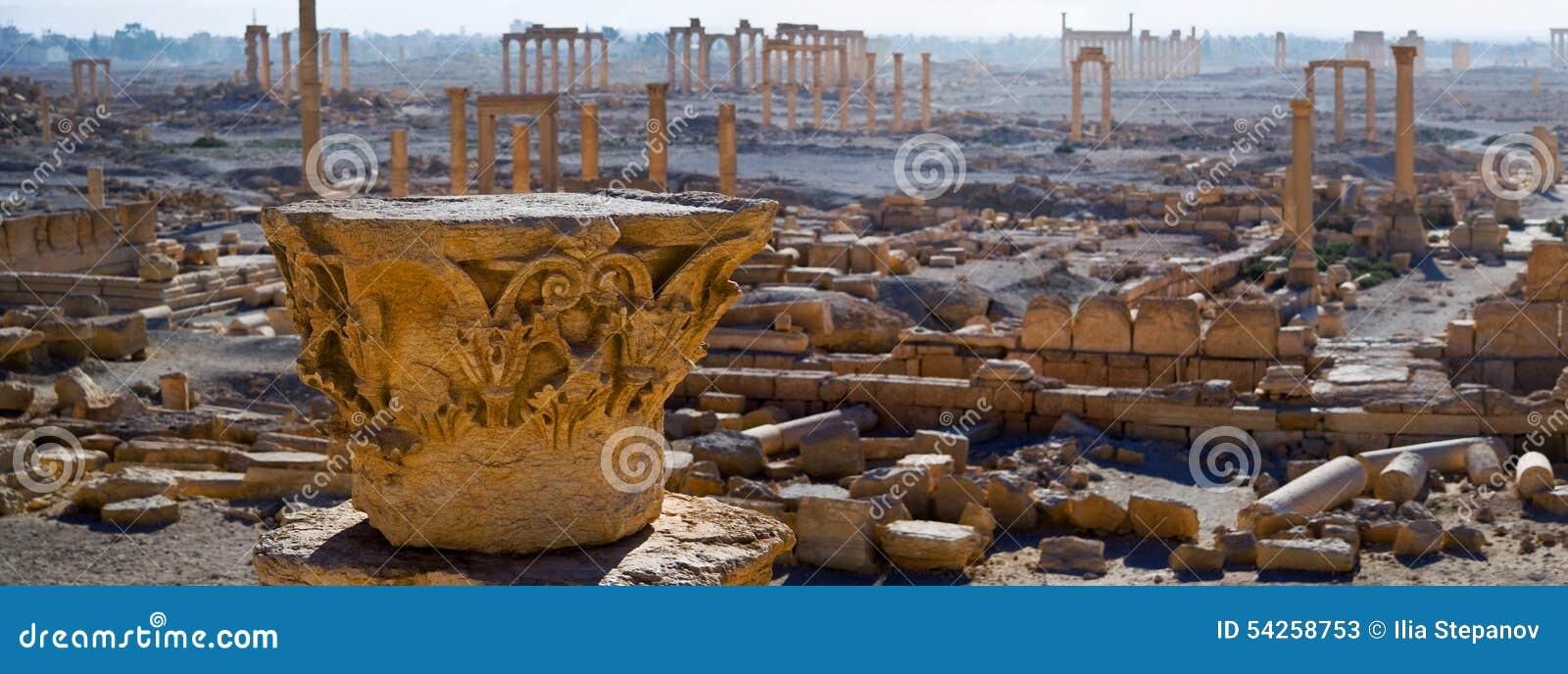 叙利亚 扇叶树头榈
