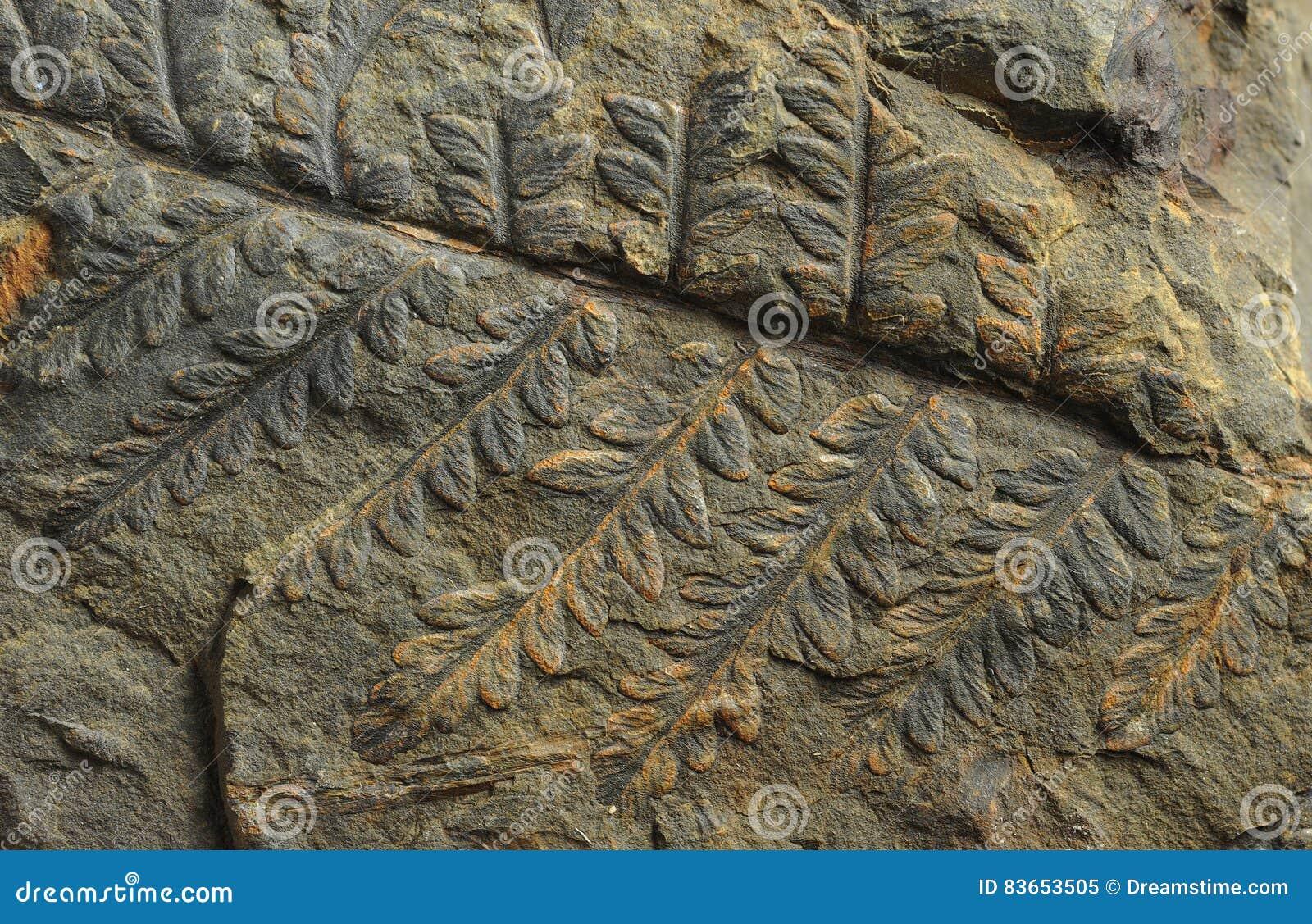 古老植物印刷品