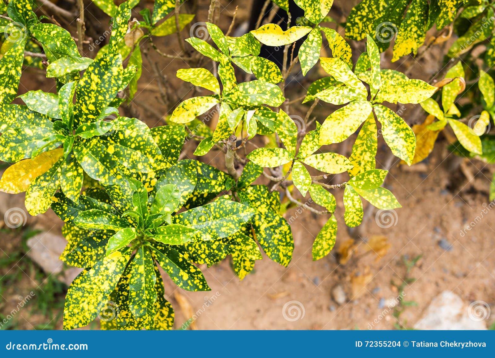 另外绿色灌木和草本背景