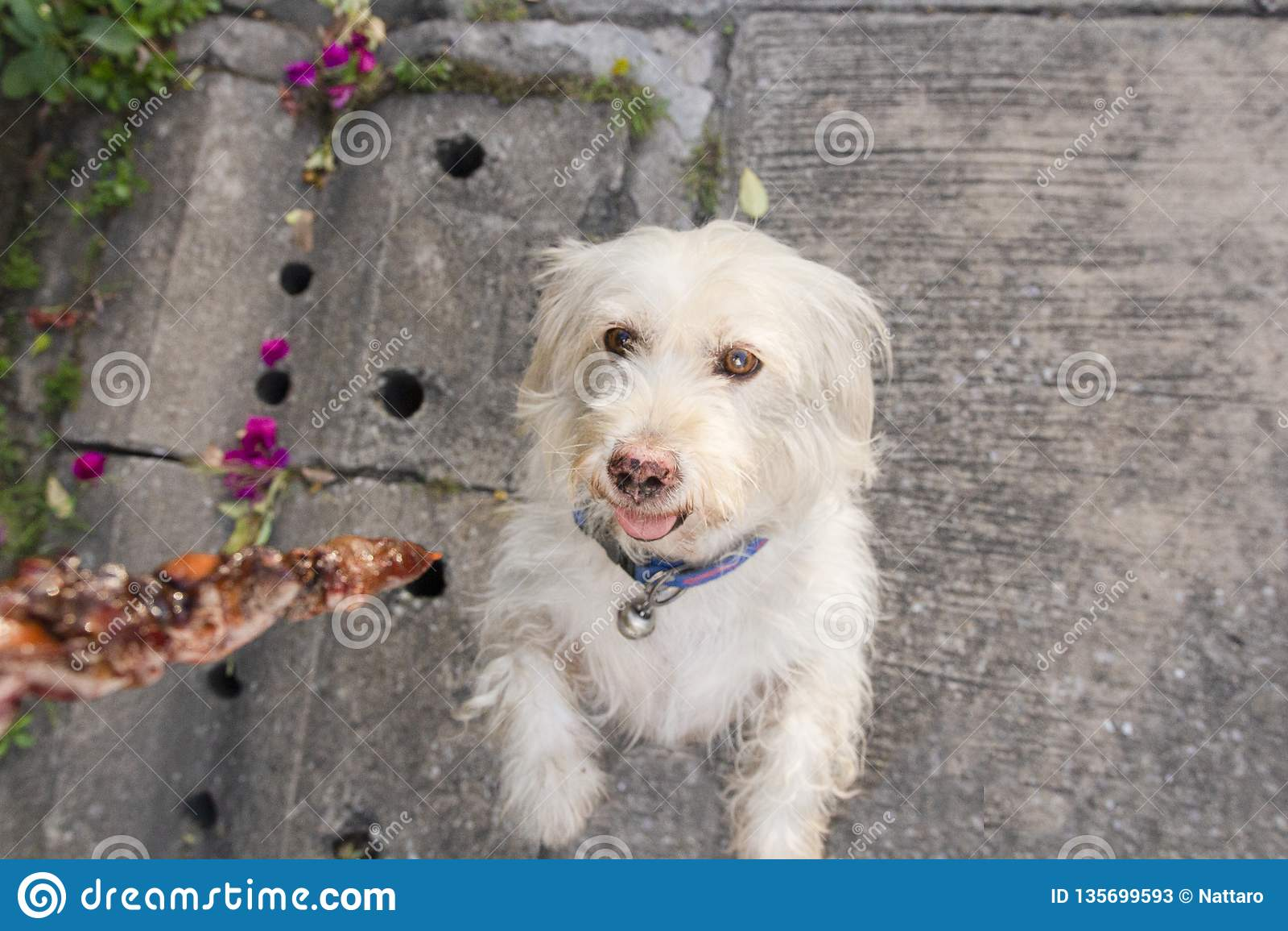 可及食物的狗从所有者街道 在狗的焦点