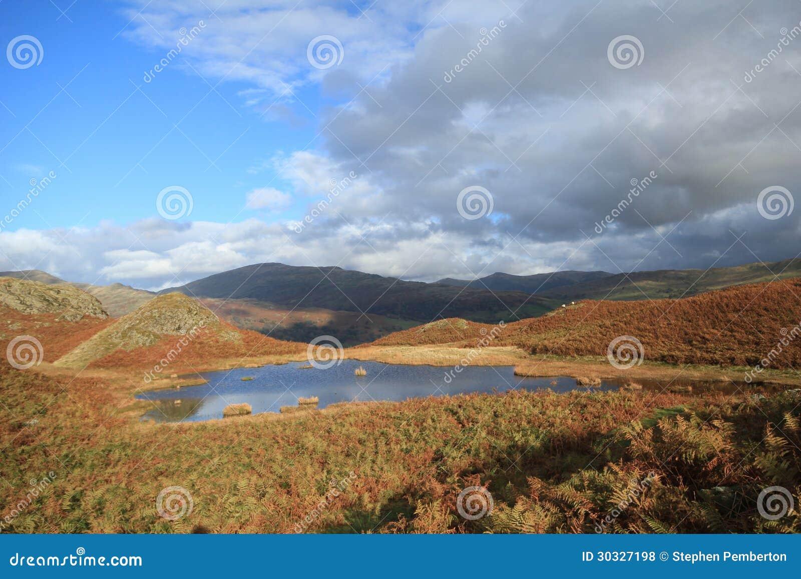 可爱的百合Tarn.Loughrigg落, Cumbria,英国。