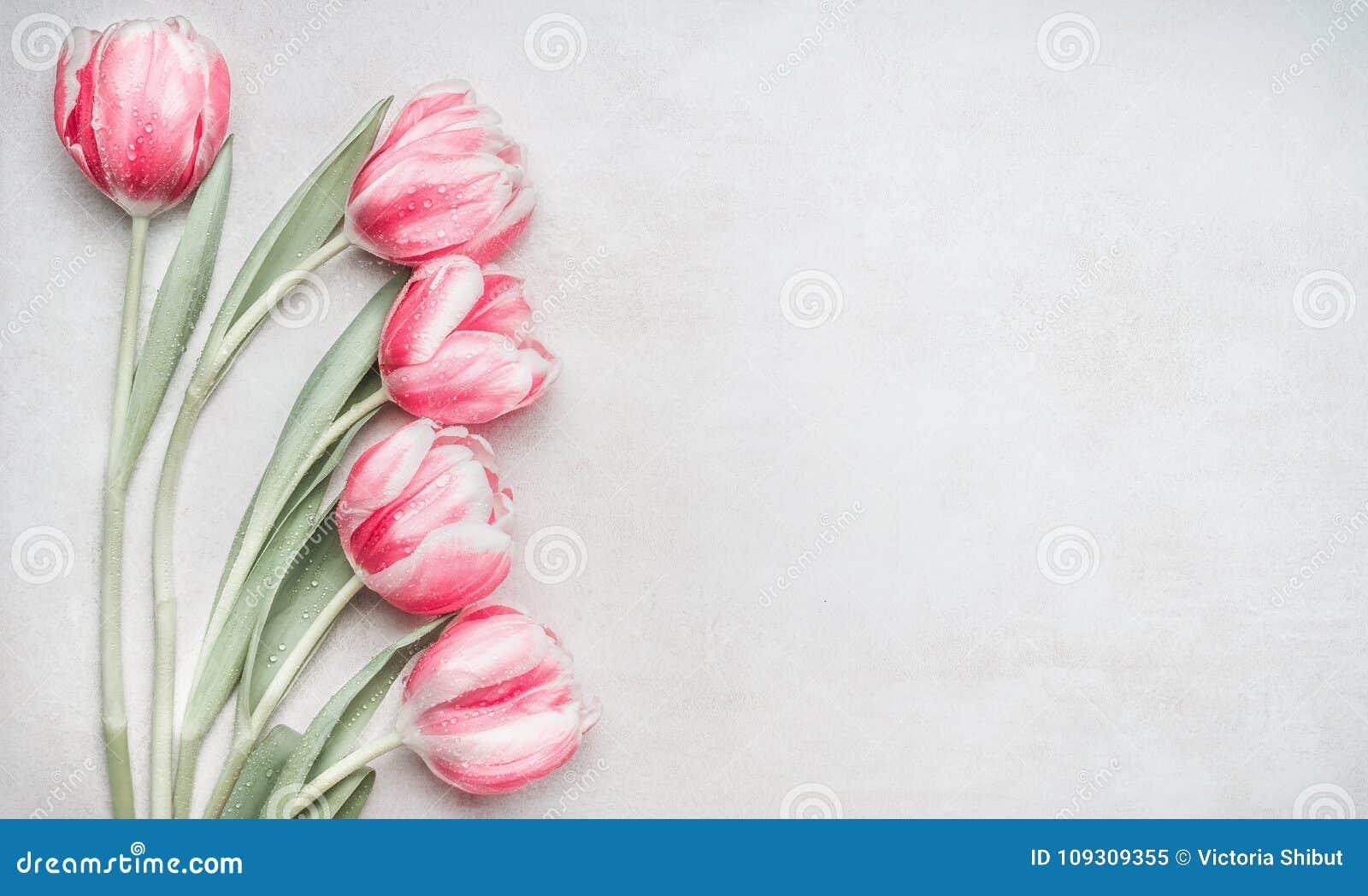 可爱的粉红彩笔郁金香束,在轻的背景,顶视图的花卉边界 布局春天假日