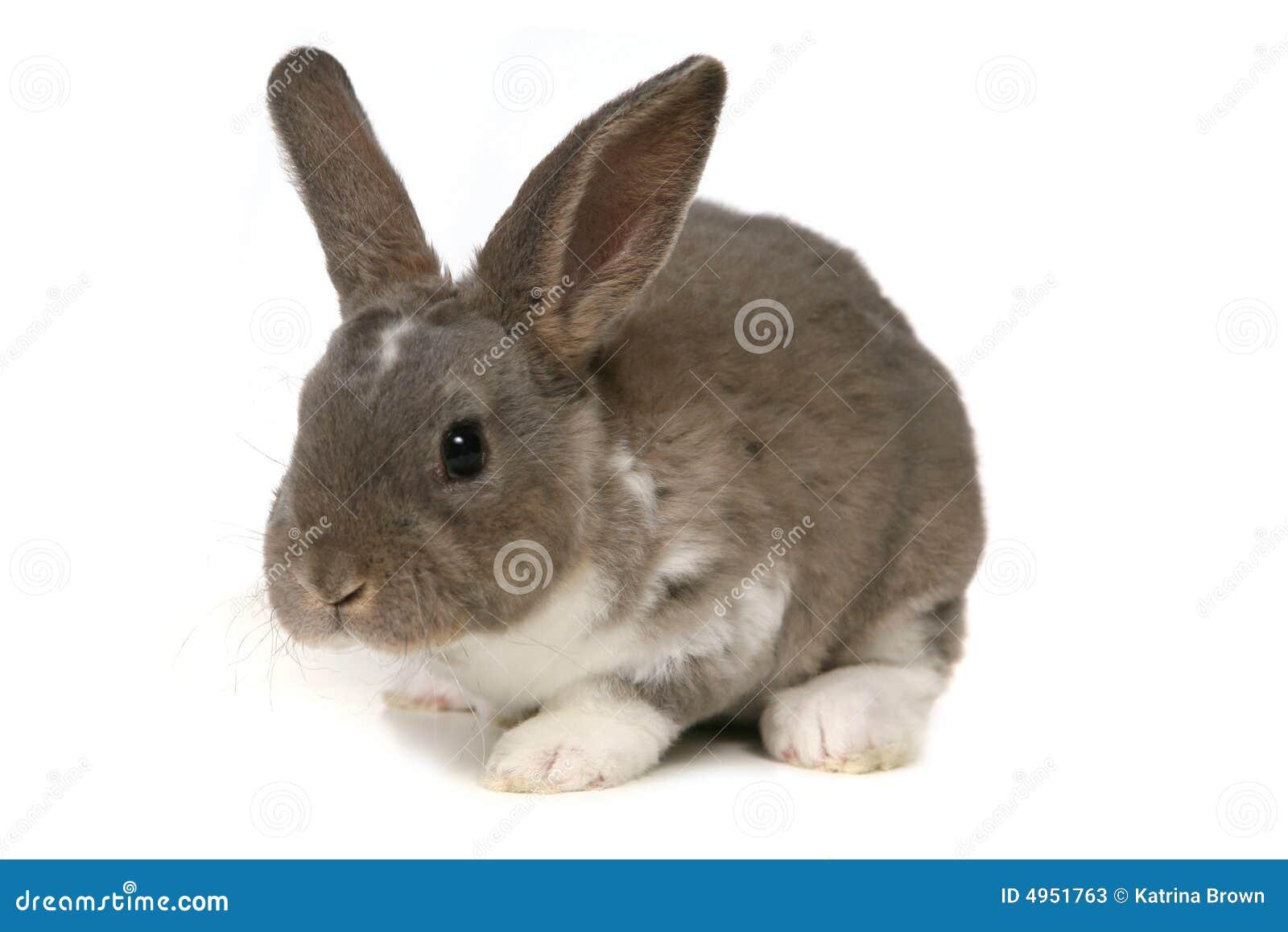 可爱的背景兔宝宝白色