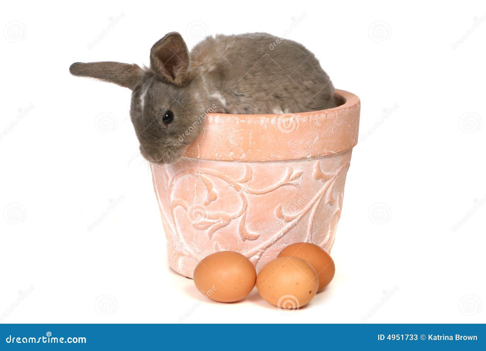 可爱的背景兔宝宝peekin白色