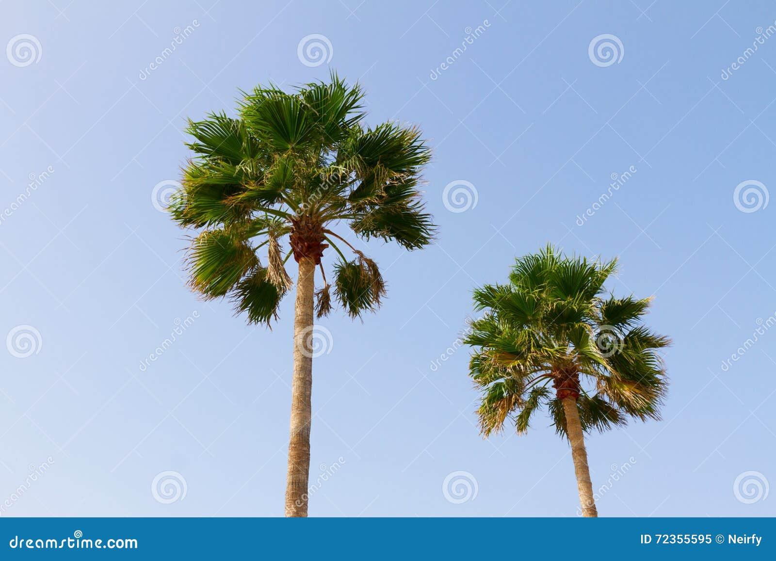 可西嘉岛海岛地中海掌上型计算机摄影被采取的结构树