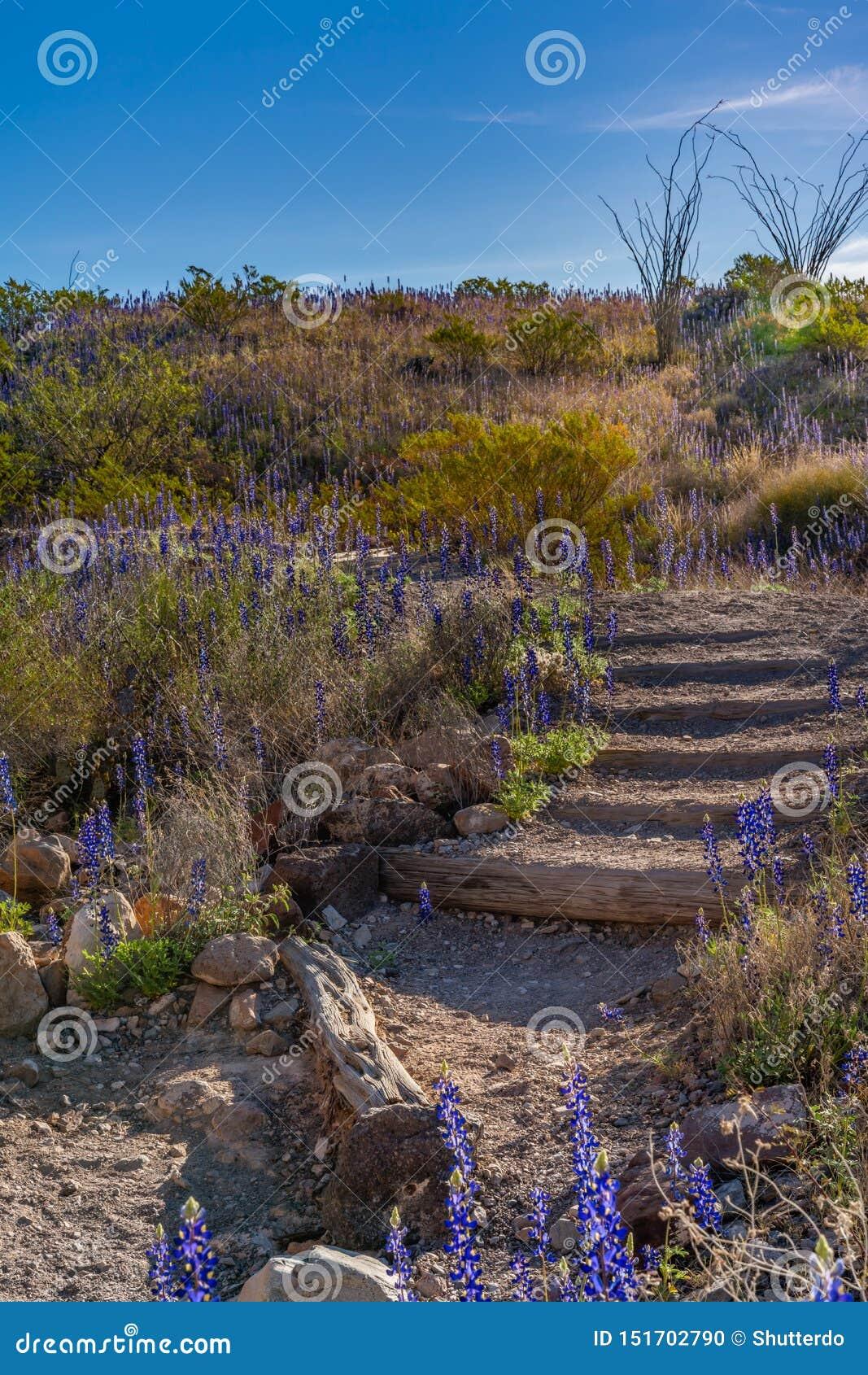 台阶下来到与下午太阳的凝灰岩峡谷里