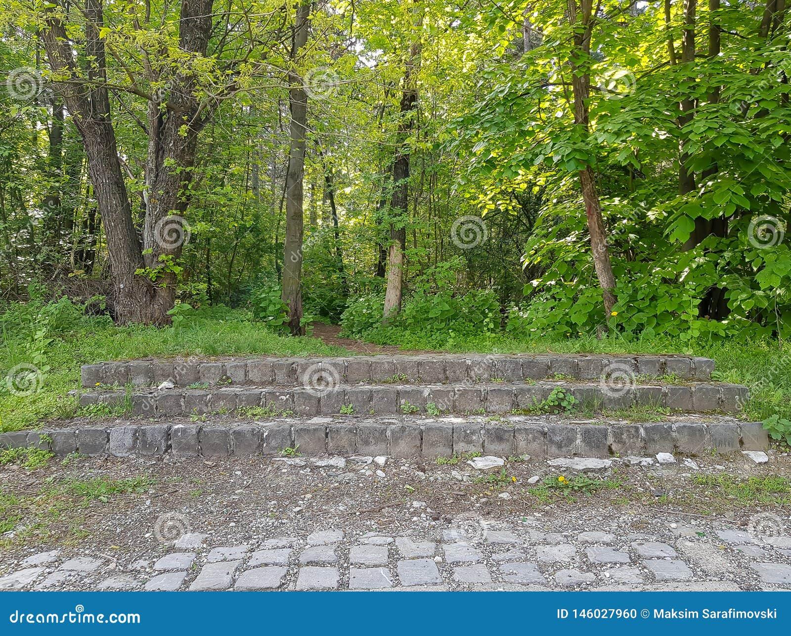 台阶的照片在森林,Vodno