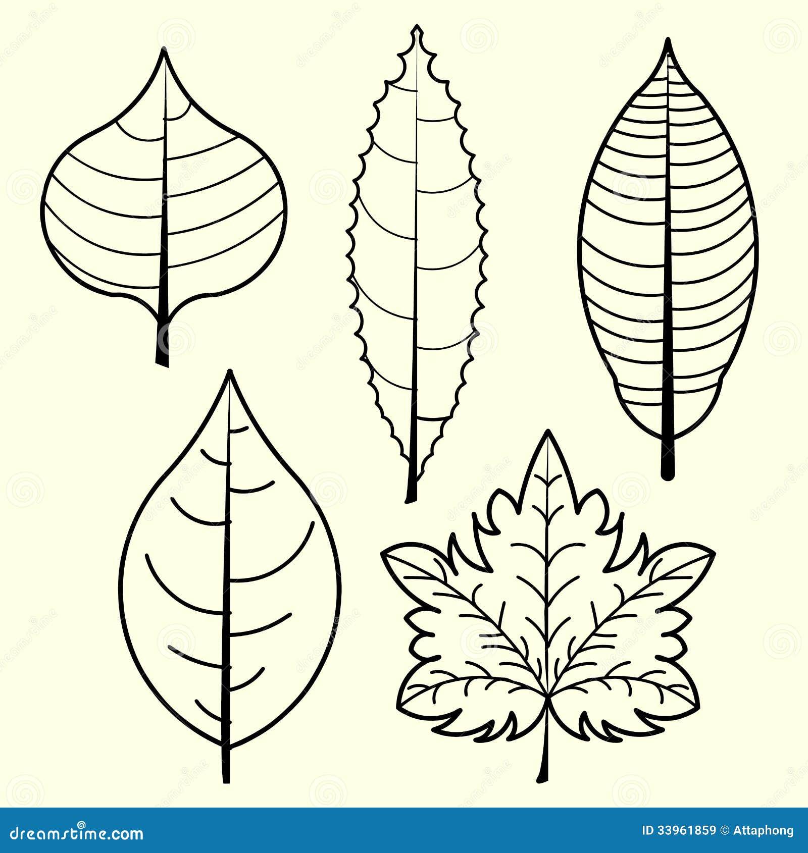 叶子传染媒介图片