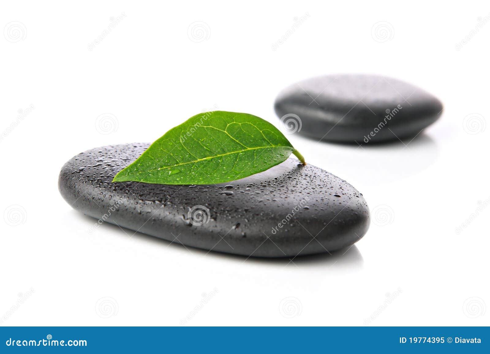 叶子向禅宗扔石头