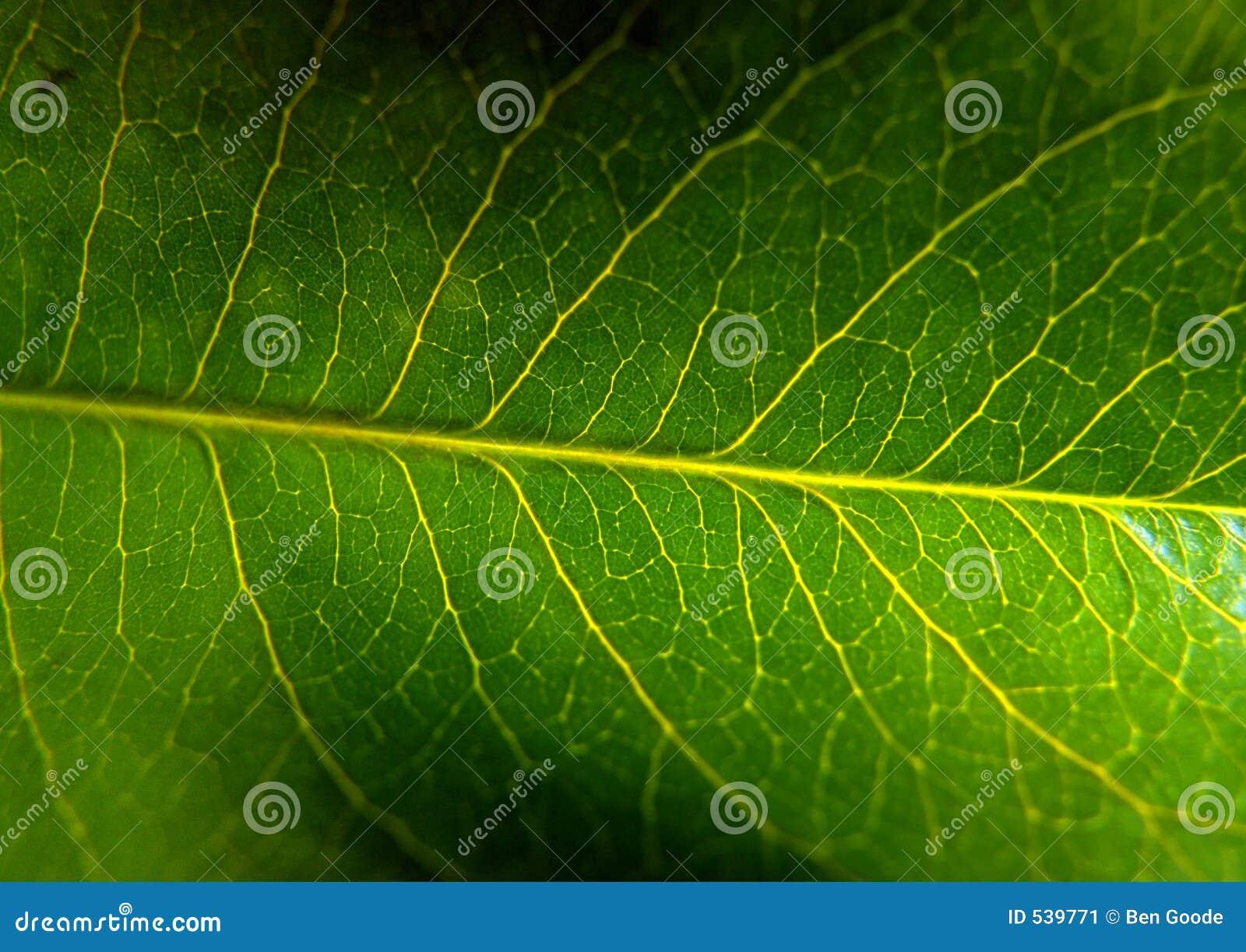 Download 叶子宏指令 库存图片. 图片 包括有 结构树, 增长, 工厂, 生活, 墙纸, 本质, 影子, 居住, 绿色 - 539771