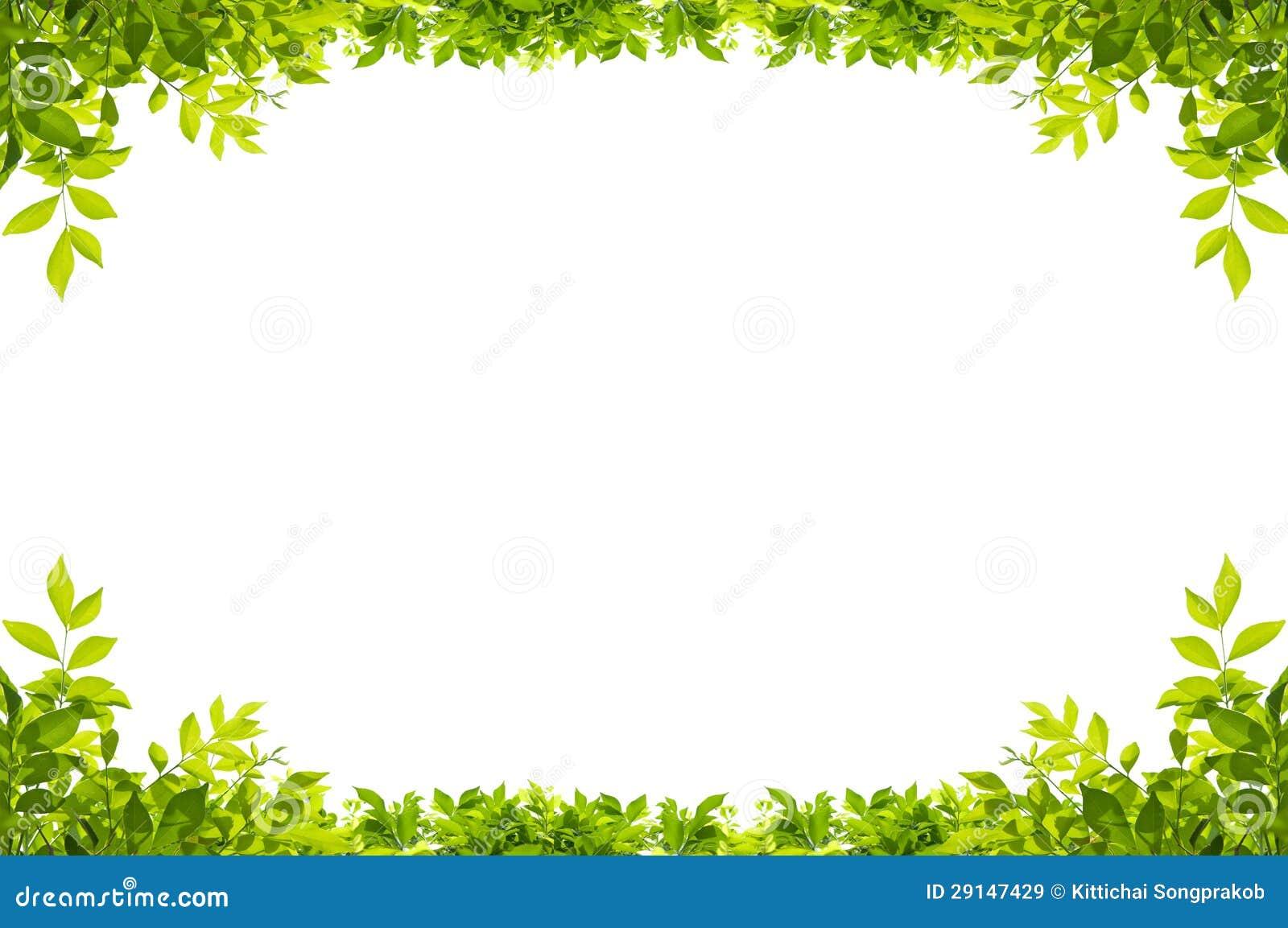 叶子在空白背景构成查出.