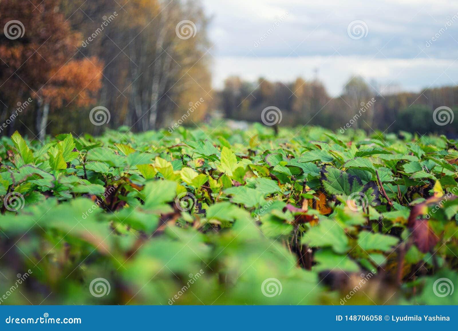 叶子的领域在秋天背景的