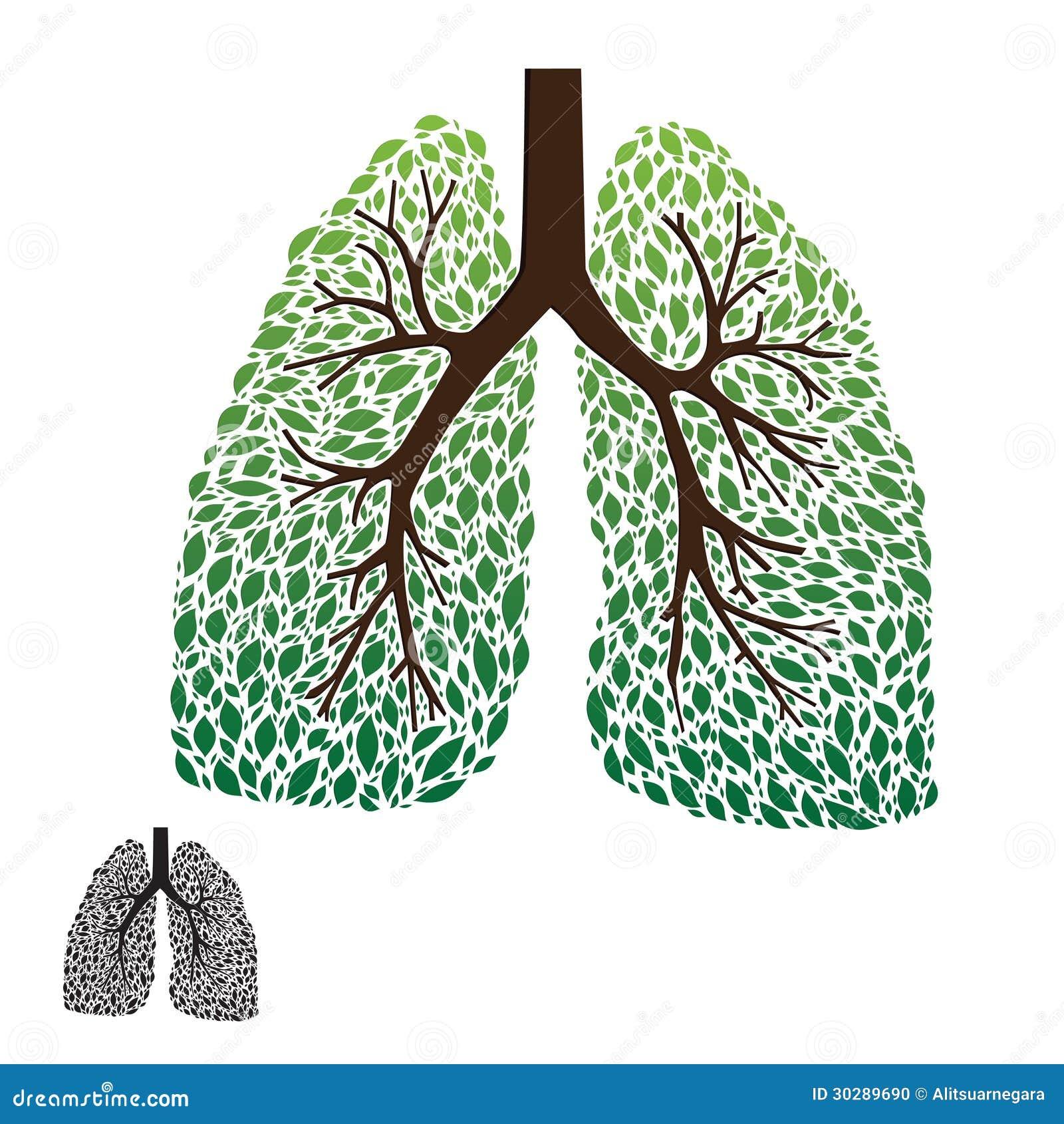 肺����y�9����_叶子肺