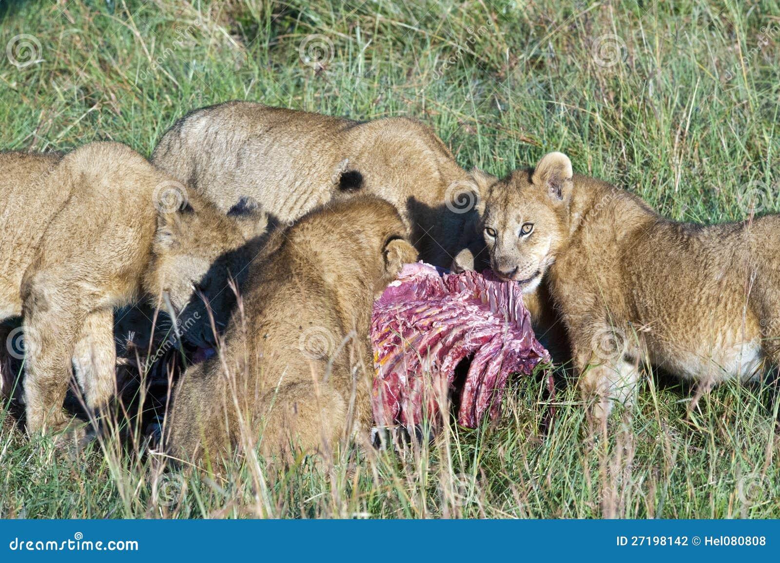 吃搜索的狮子自豪感