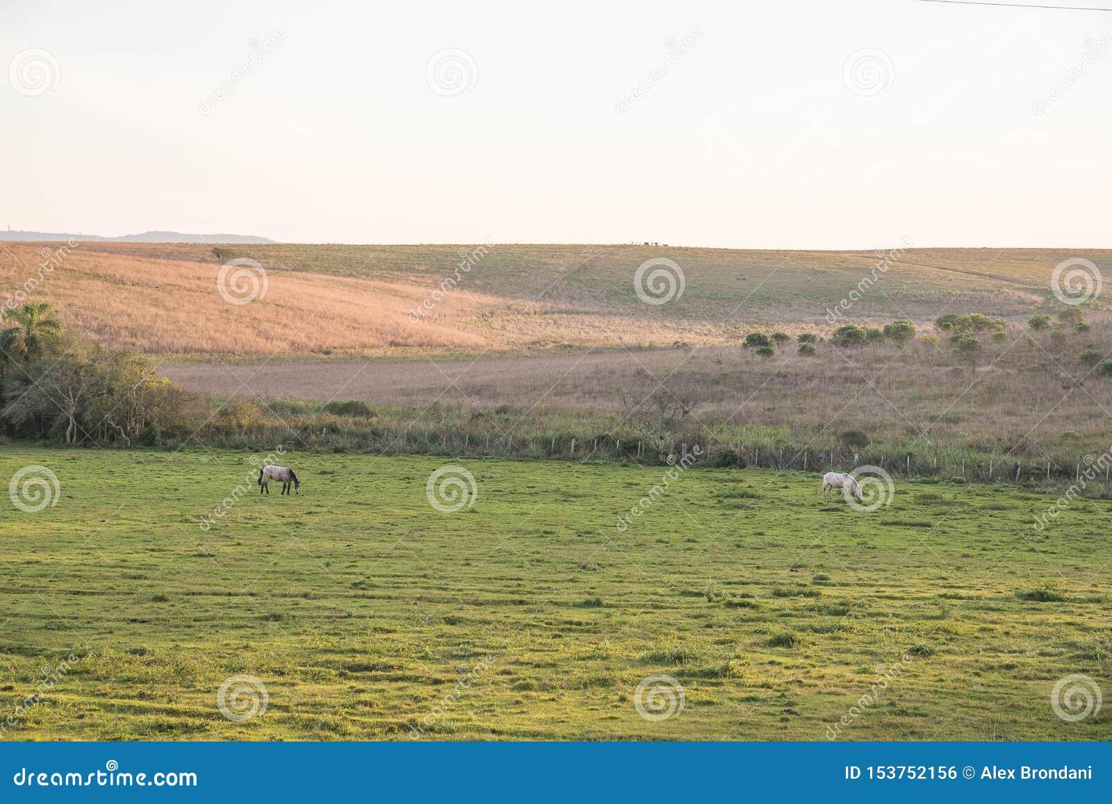吃草在冬天的黎明02的两匹马
