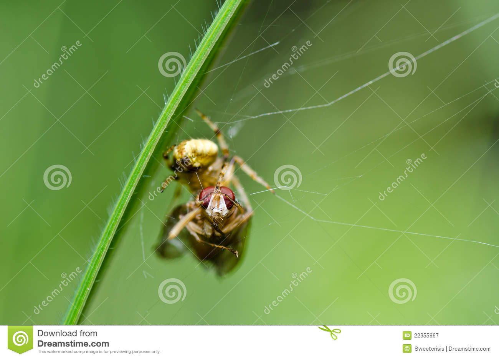 吃飞行本质蜘蛛