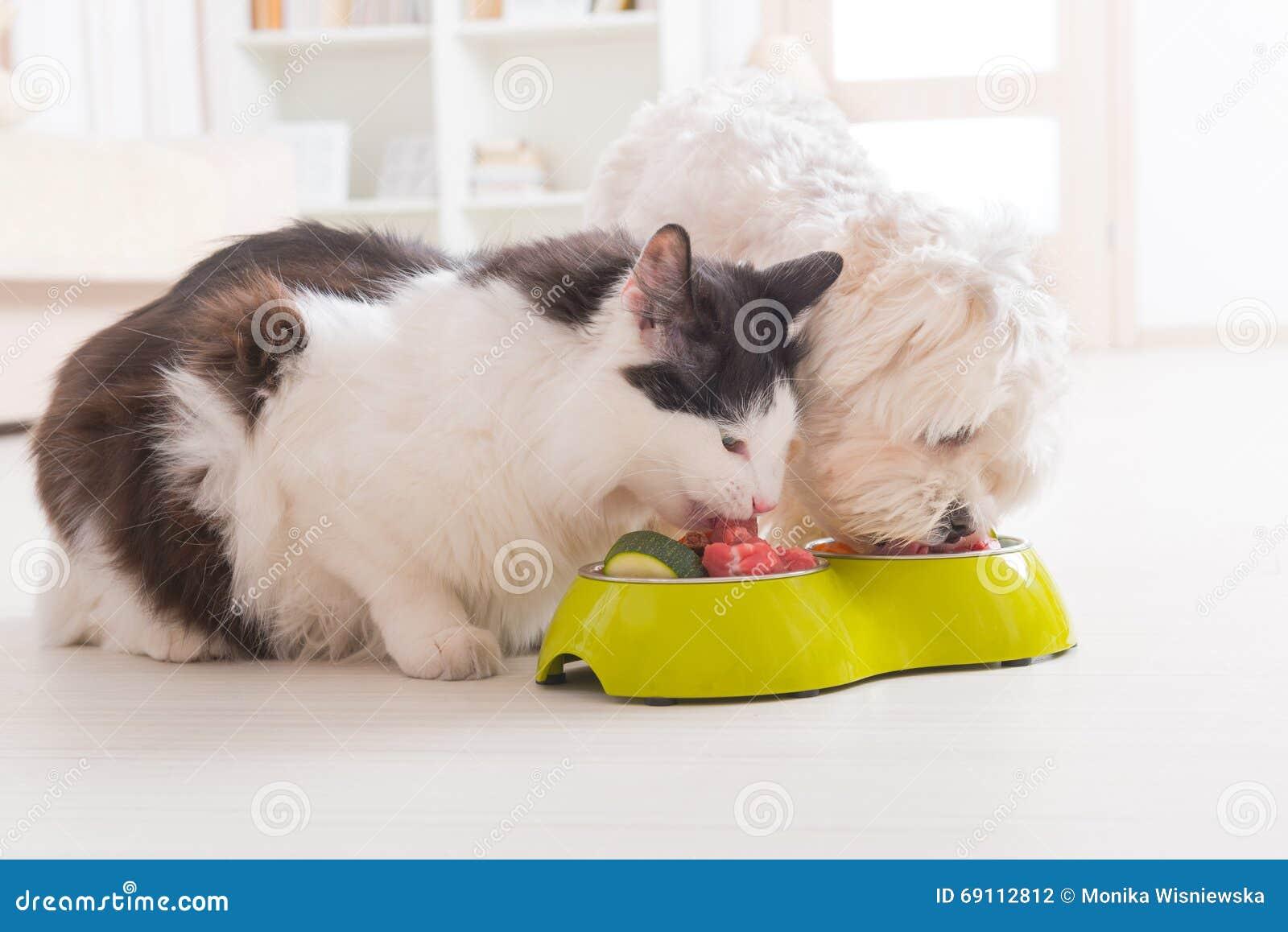 吃从碗的狗和猫自然食物