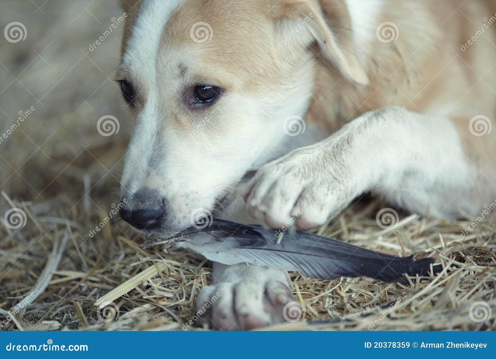 狗和人�y�'��)�al�����:)�h�_吃年轻人的狗