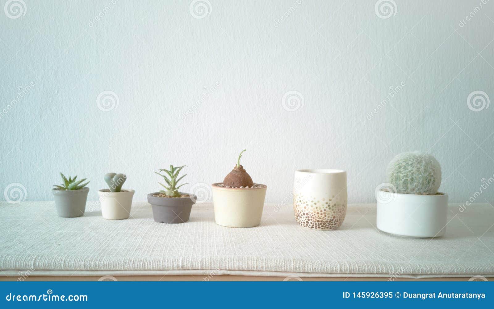 各种各样的仙人掌和多汁植物的汇集用不同的罐 房子植物装饰-图象