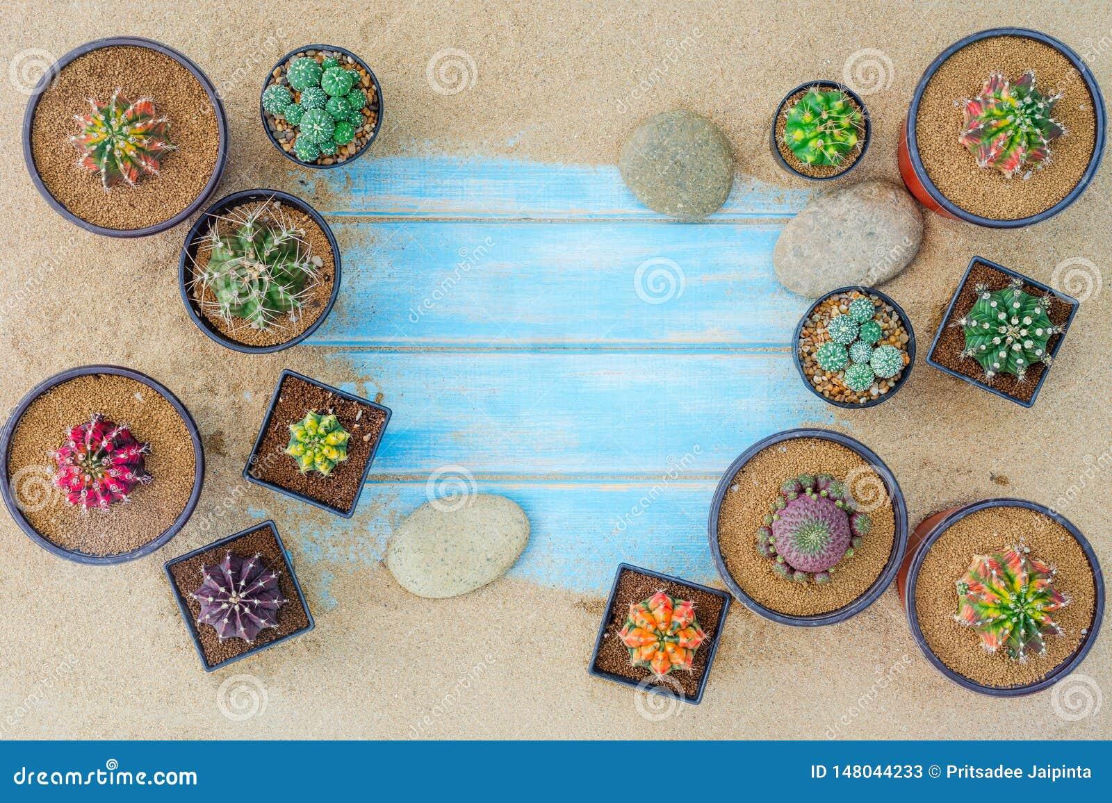 各种各样的仙人掌植物的汇集用在蓝色背景的不同的罐