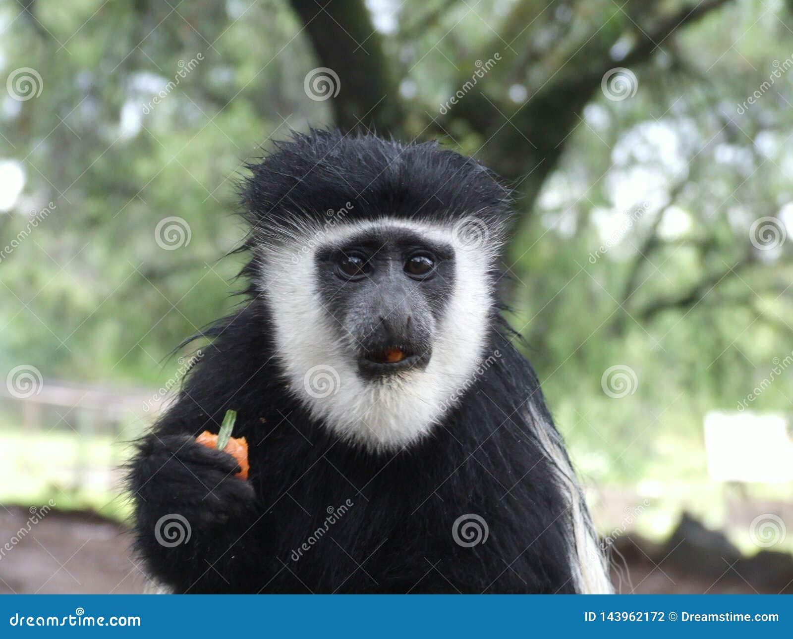 各种各样的动物在徒步旅行队的非洲在肯尼亚