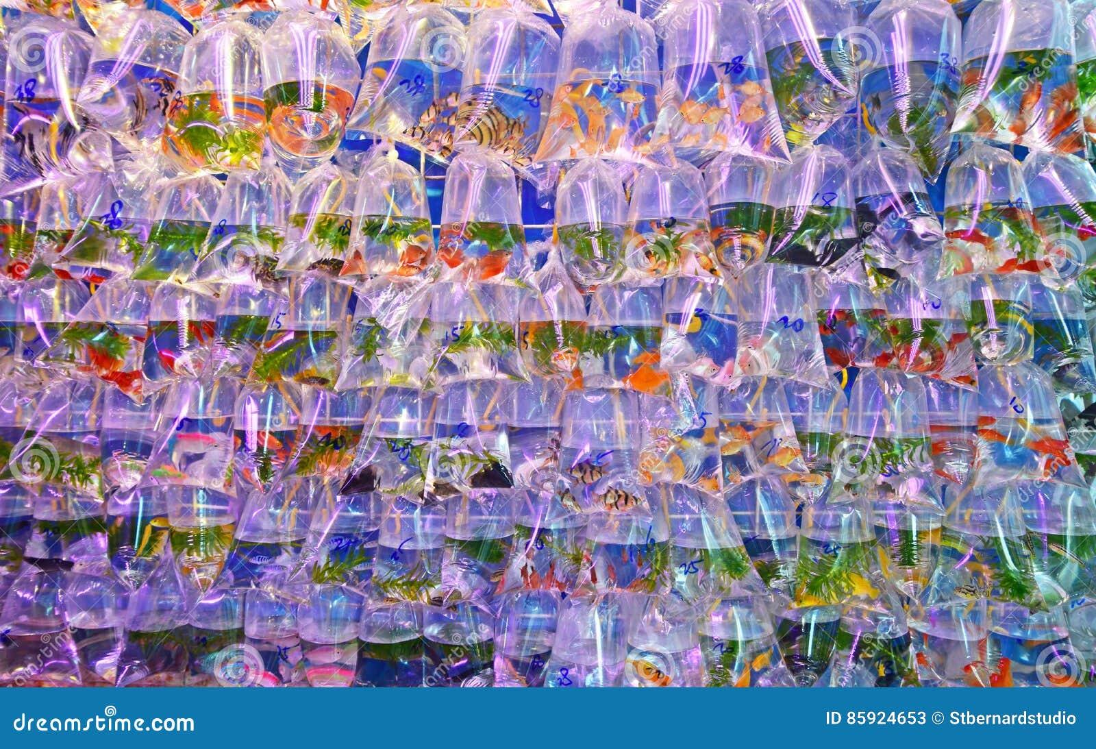 各种各样的过度拥挤淡水水族馆鱼在透明塑料袋卖了