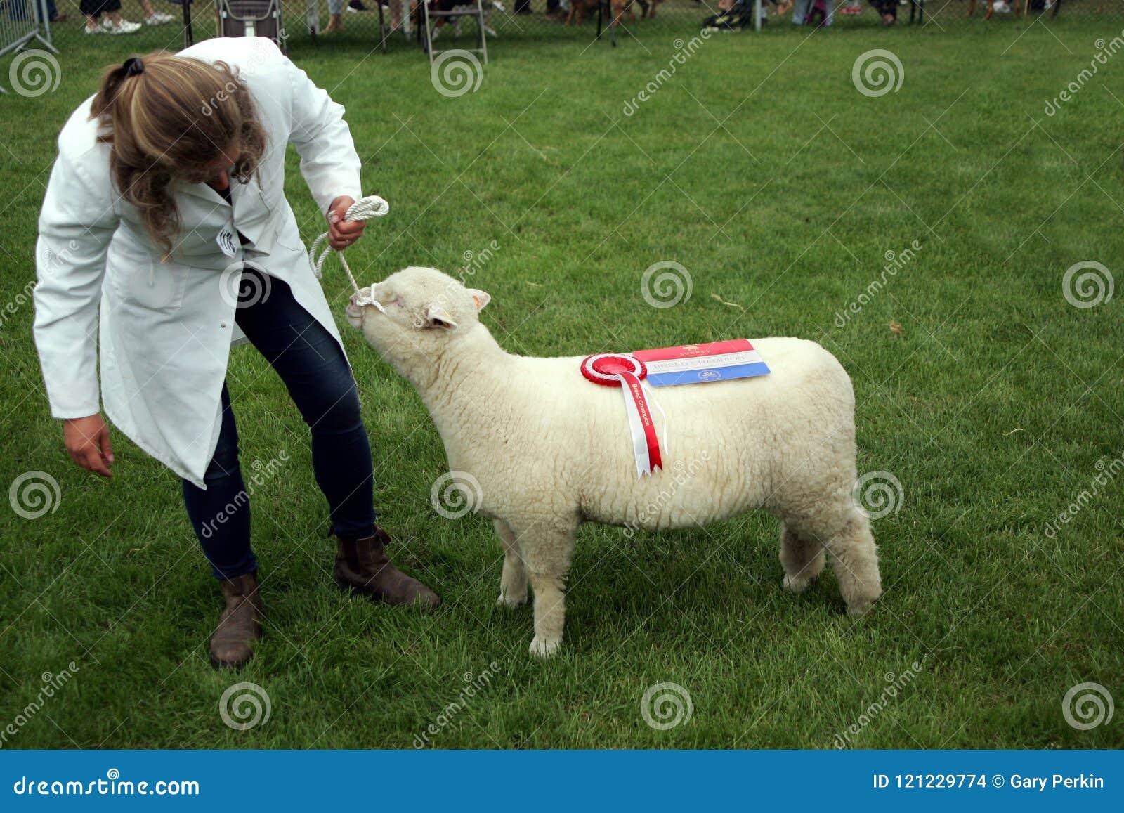 吉尔福德,英国- 2018年5月28日:妇女交配动物者和她的奖wi
